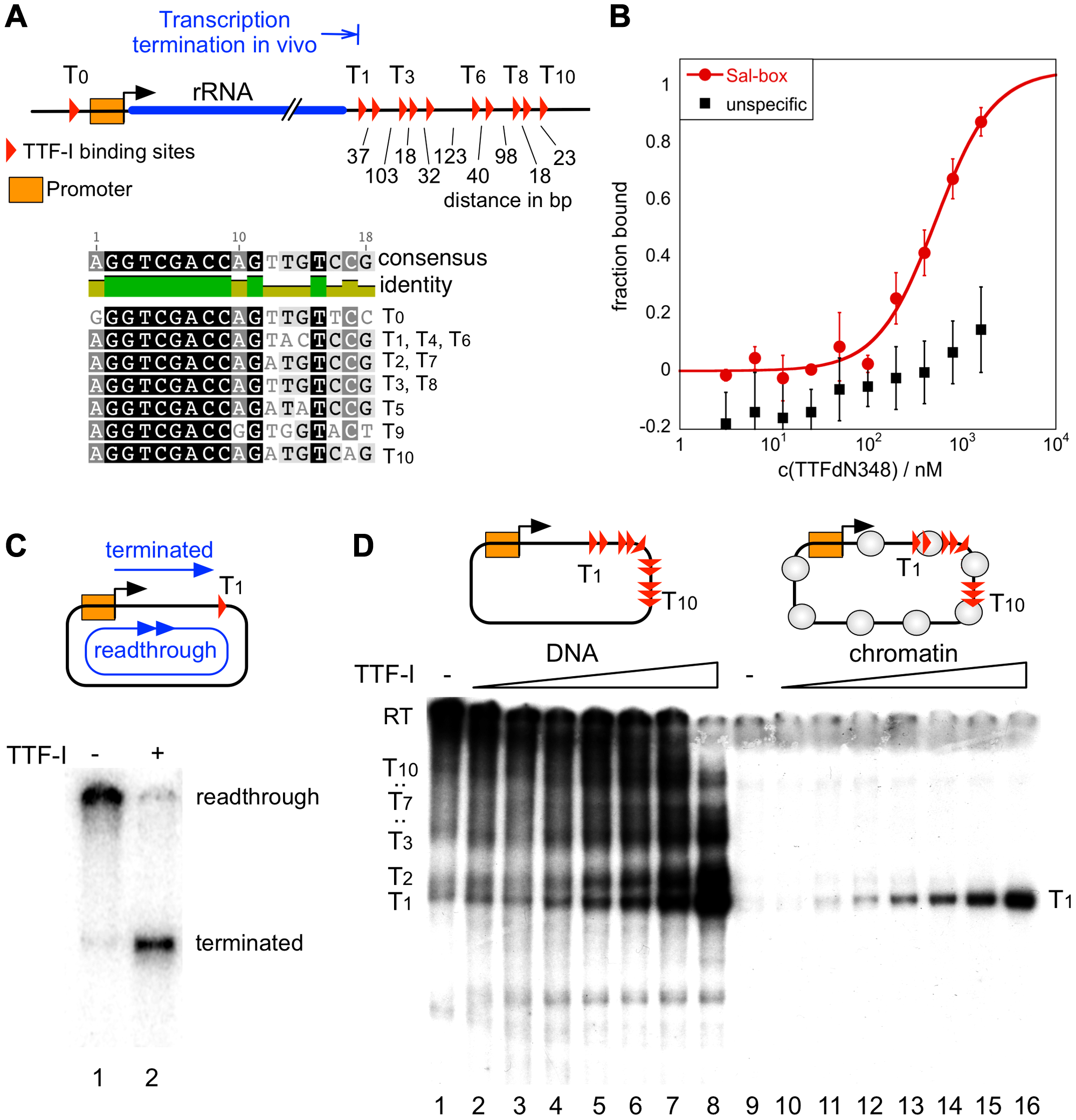 Chromatin-specific termination at the homotypic cluster of TTF-I.