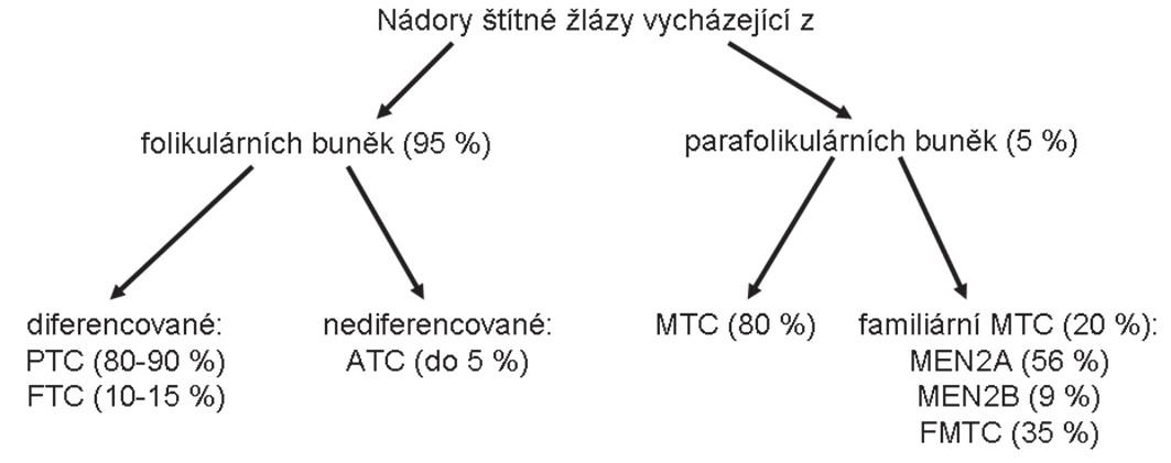 Schéma 1. Diagram rozdělení karcinomů štítné žlázy a jejich poměrné zastoupení.