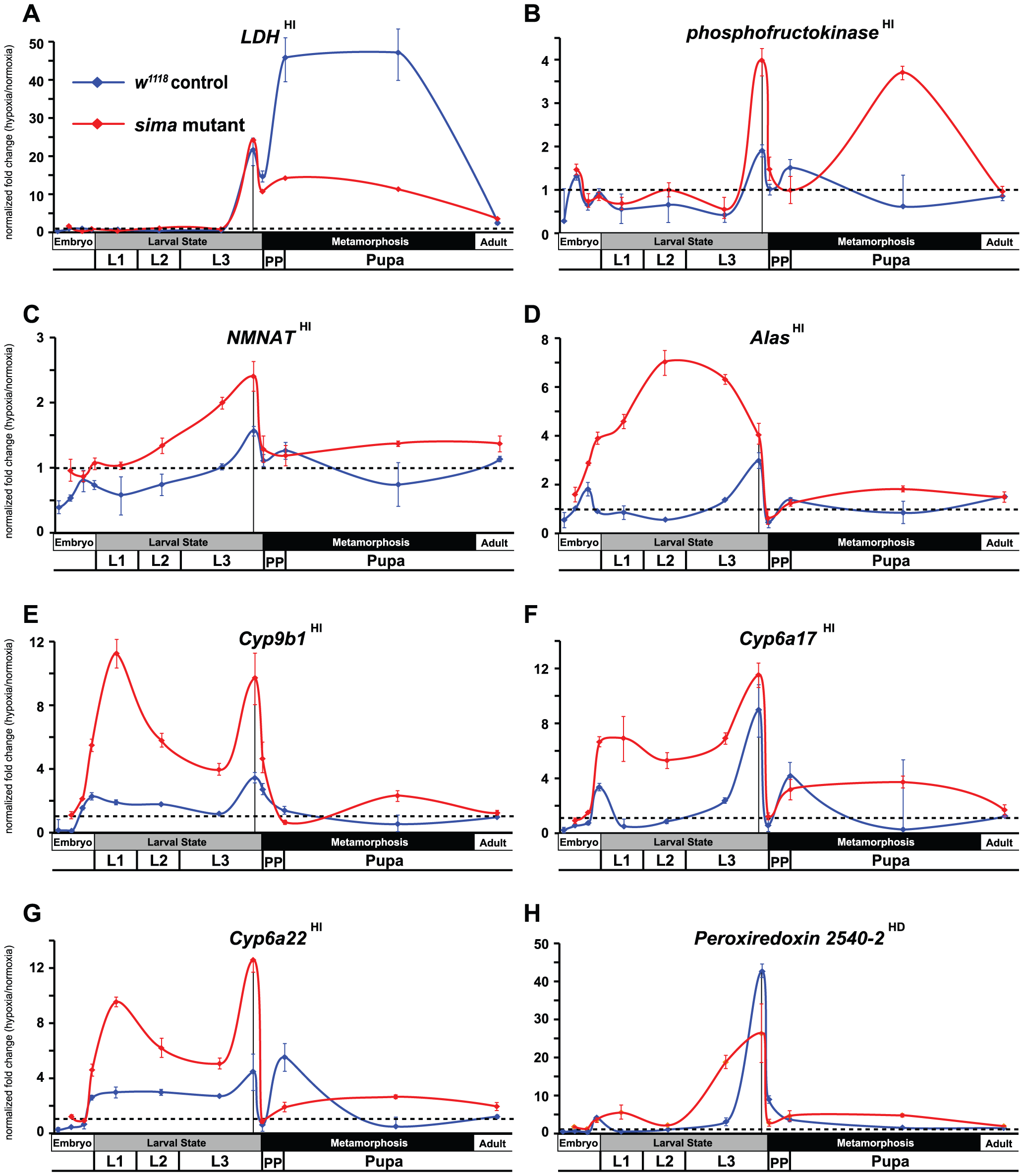 Temporal expression of HIF-independent hypoxic response genes.