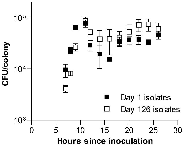 Time series examination of the development of <i>S. pneumoniae</i> colonies.