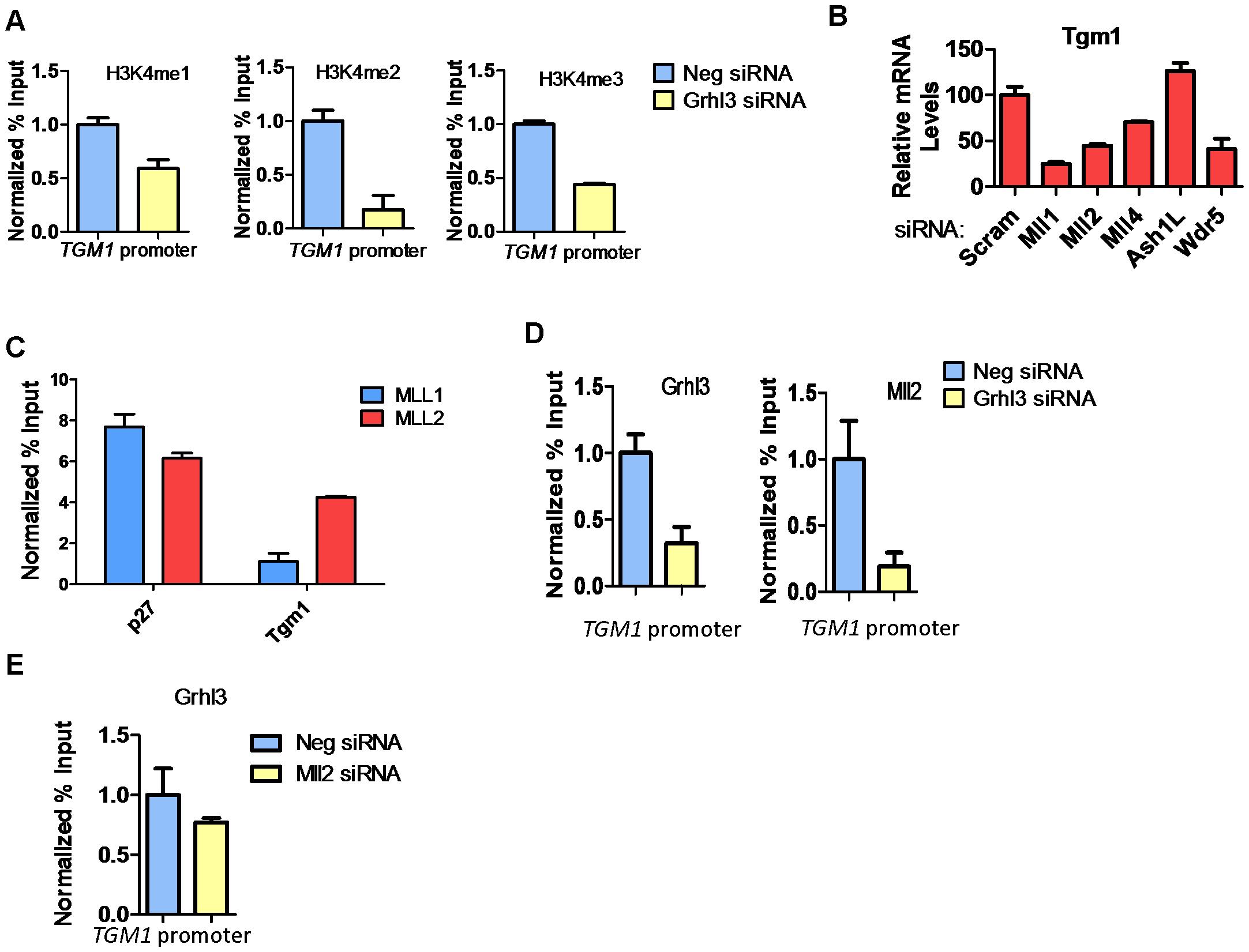 MLL2 occupancy and H3K4 methylation at the <i>TGM1</i> promoter depend on GRHL3 in human epidermal keratinocytes.