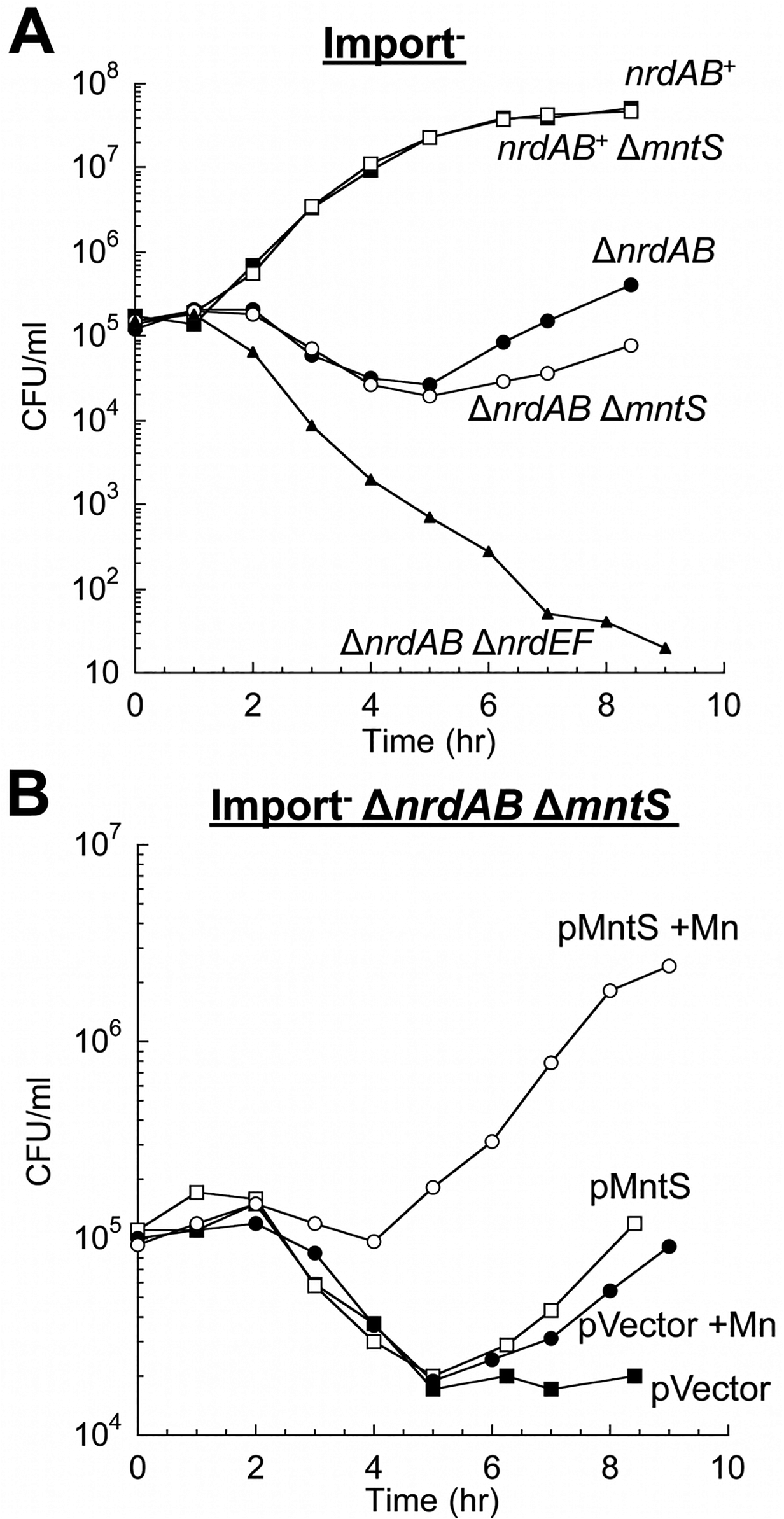 MntS helps activate the manganese-dependent RNR, NrdEF.