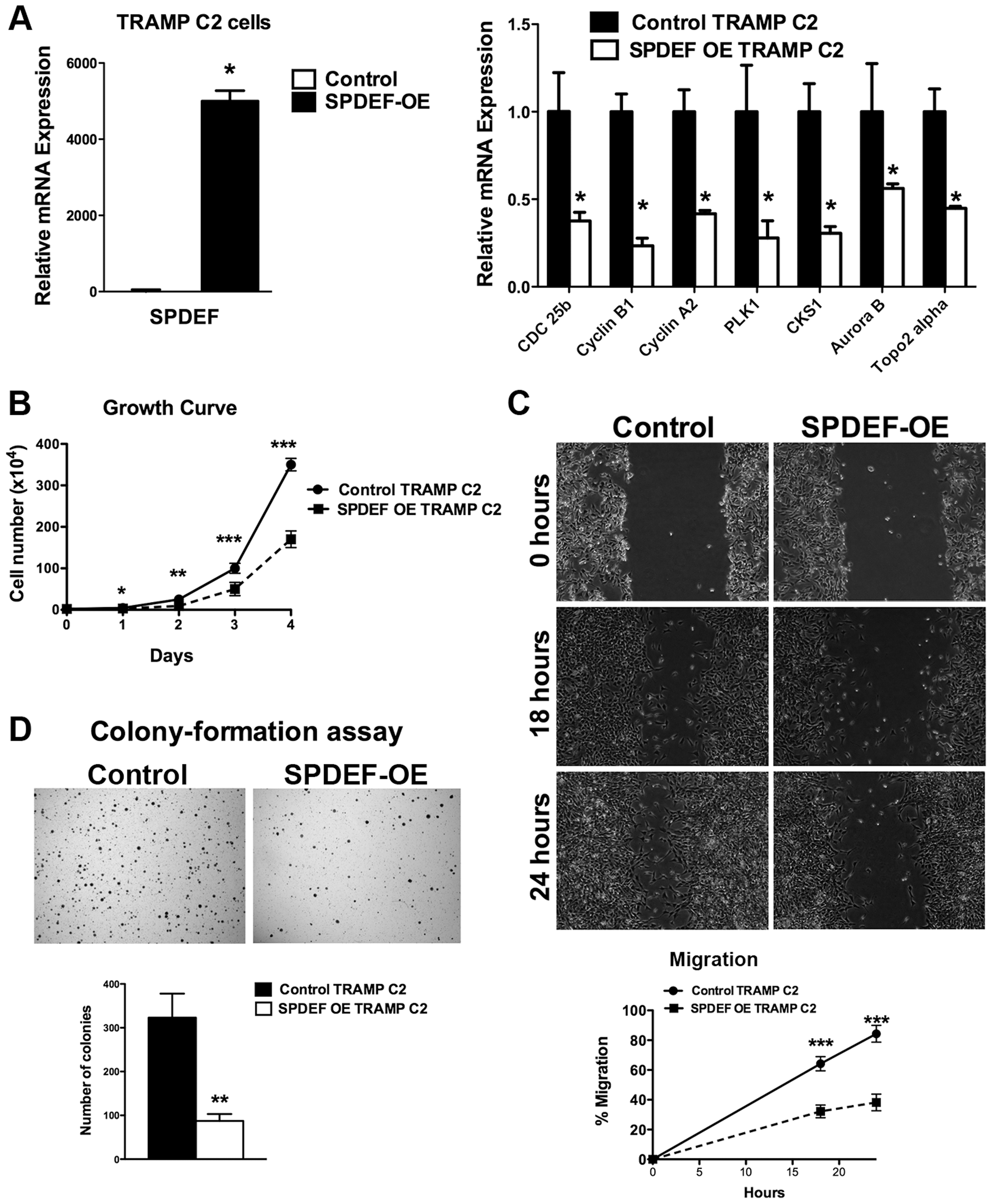 Expression of SPDEF in TRAMP C2 prostate adenocarcinoma cells decreased cell growth, reduced migration and colony formation on soft agar.