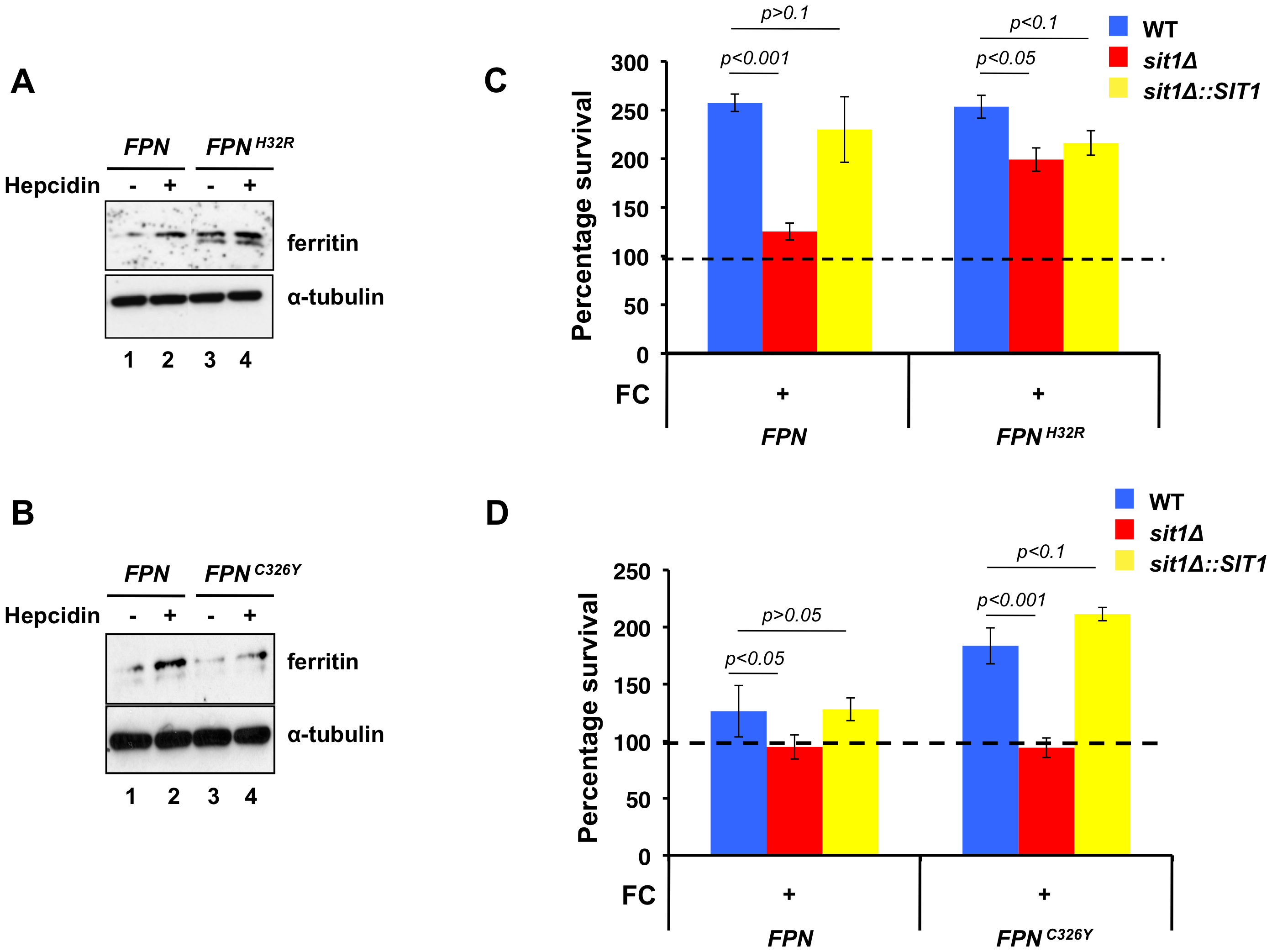 Macrophage models of Fe homeostasis disease modulate survival of <i>C. glabrata</i> and dependence on siderophore Fe.