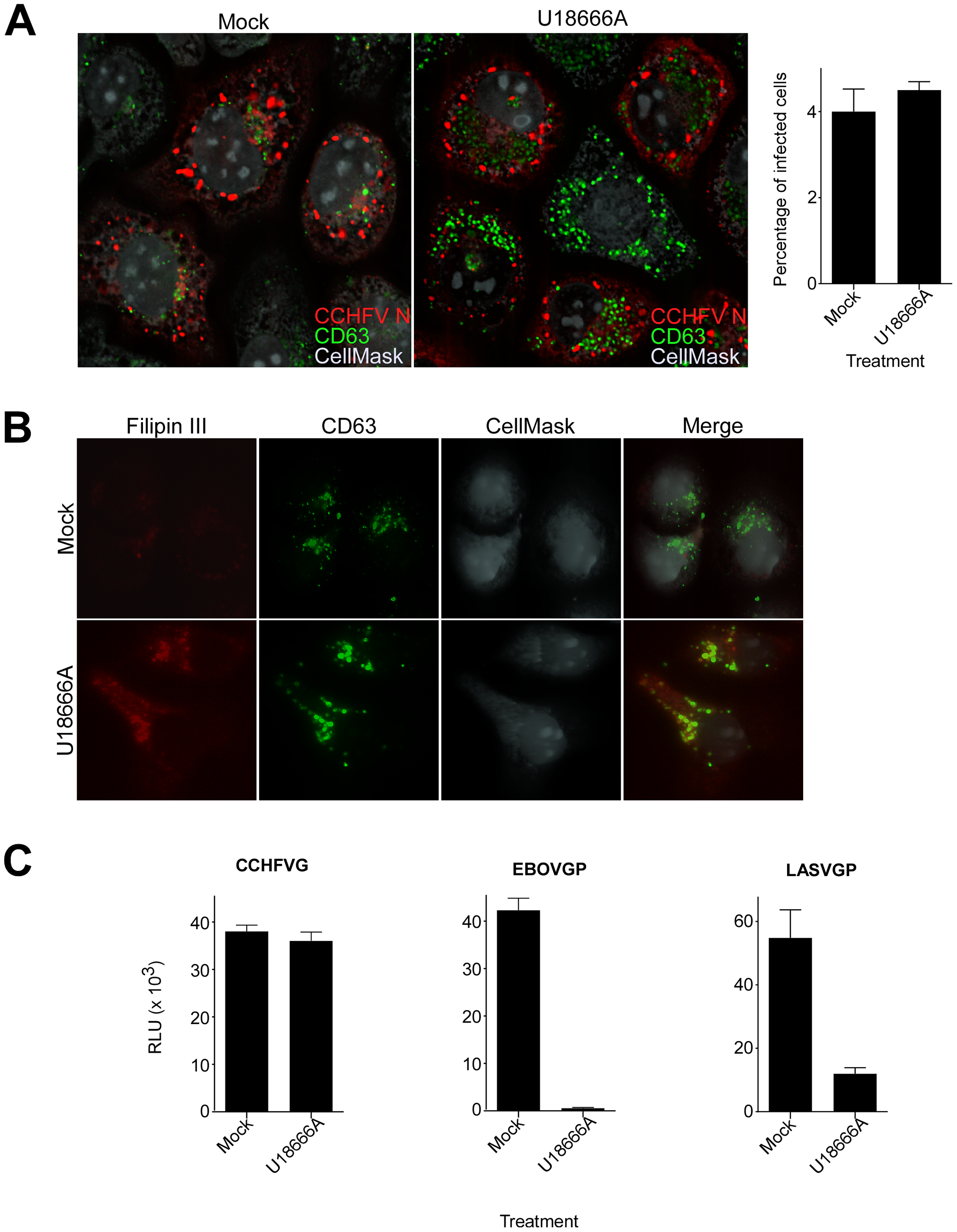 Lipid transport out of MVBs is dispensable for CCHFV entry.