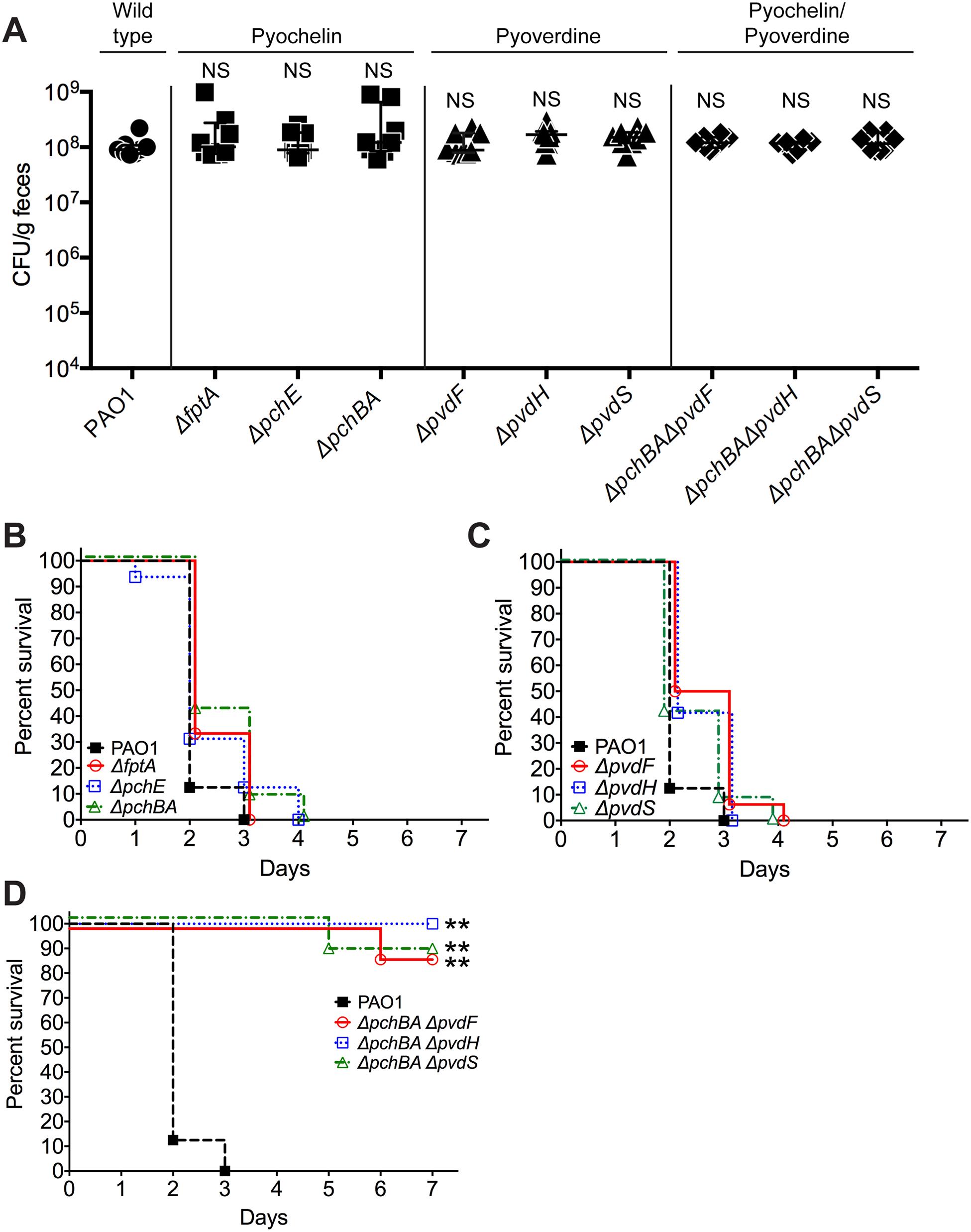 Deletion of <i>P</i>. <i>aeruginosa</i> pyochelin and pyoverdine genes attenuates <i>P</i>. <i>aeruginosa</i> virulence.