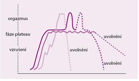 Křivka vzrušení v cyklu ženské sexuální aktivity. Upraveno podle [8]