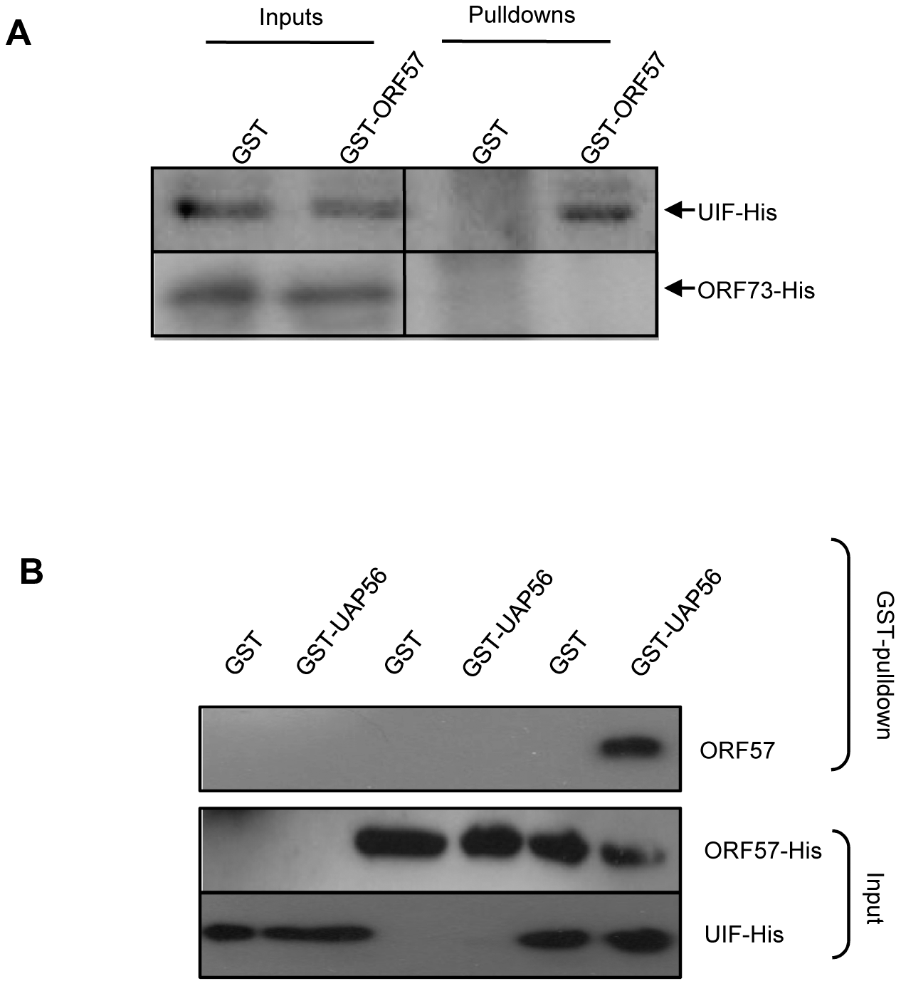 ORF57 is linked to the hTREX complex by UIF; however, ORF57 preferentially interacts with Aly over UIF.