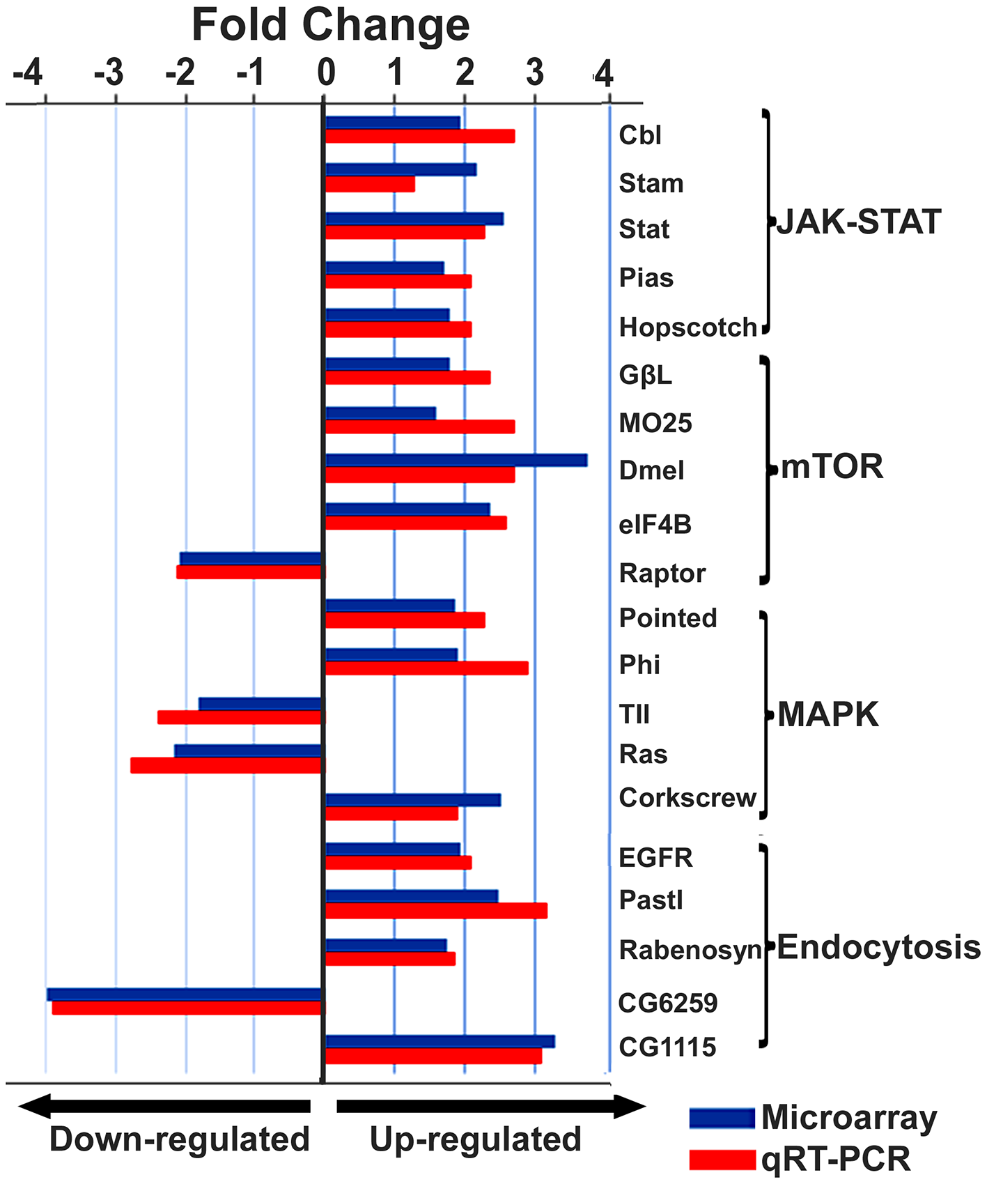 Expression levels of immune-related transcripts in IAPV infected adults.