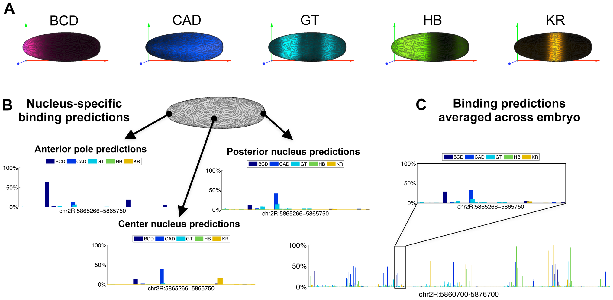 Predicting binding in single-nucleus resolution.