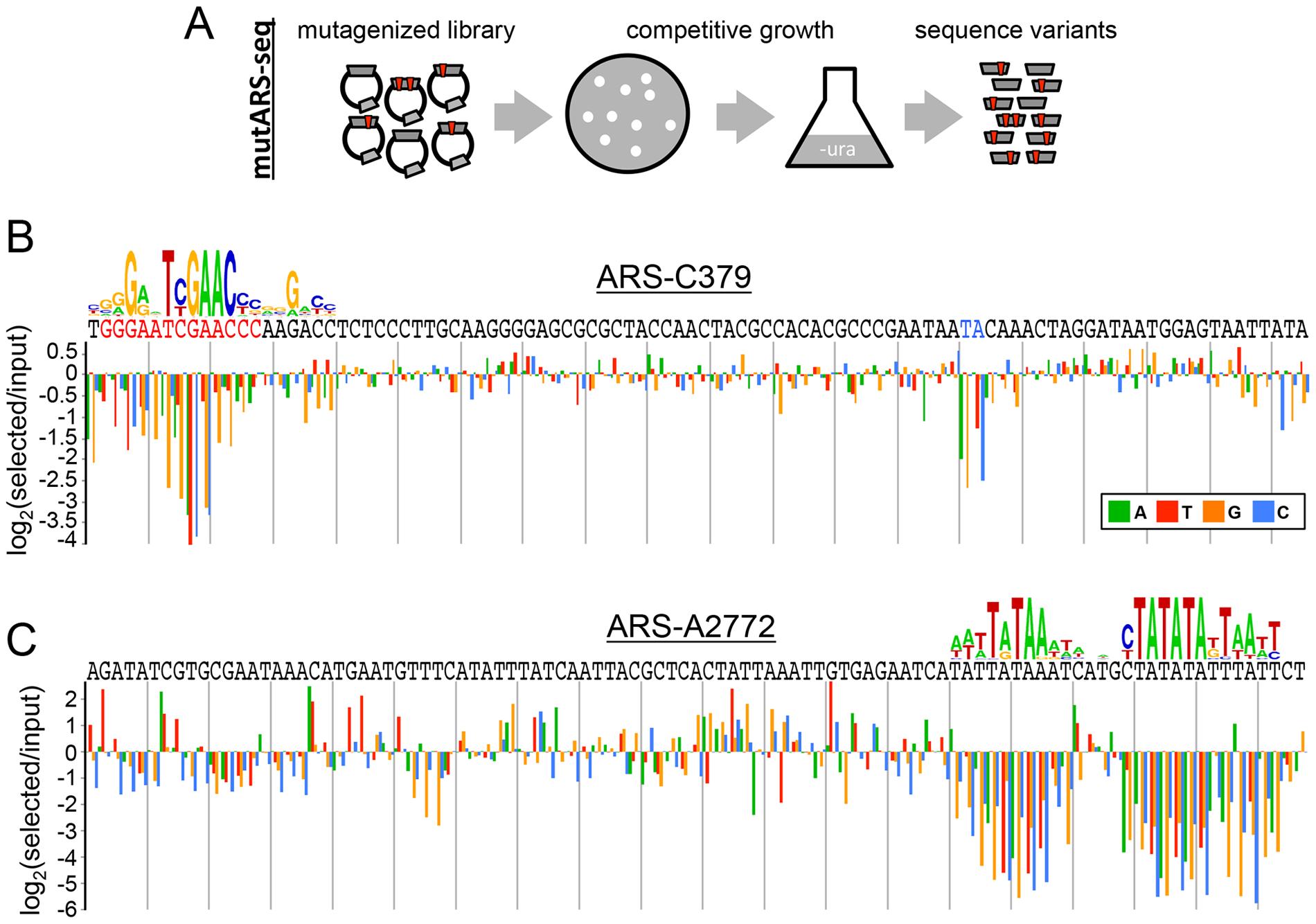 Deep mutational scanning of <i>P. pastoris</i> ARSs.