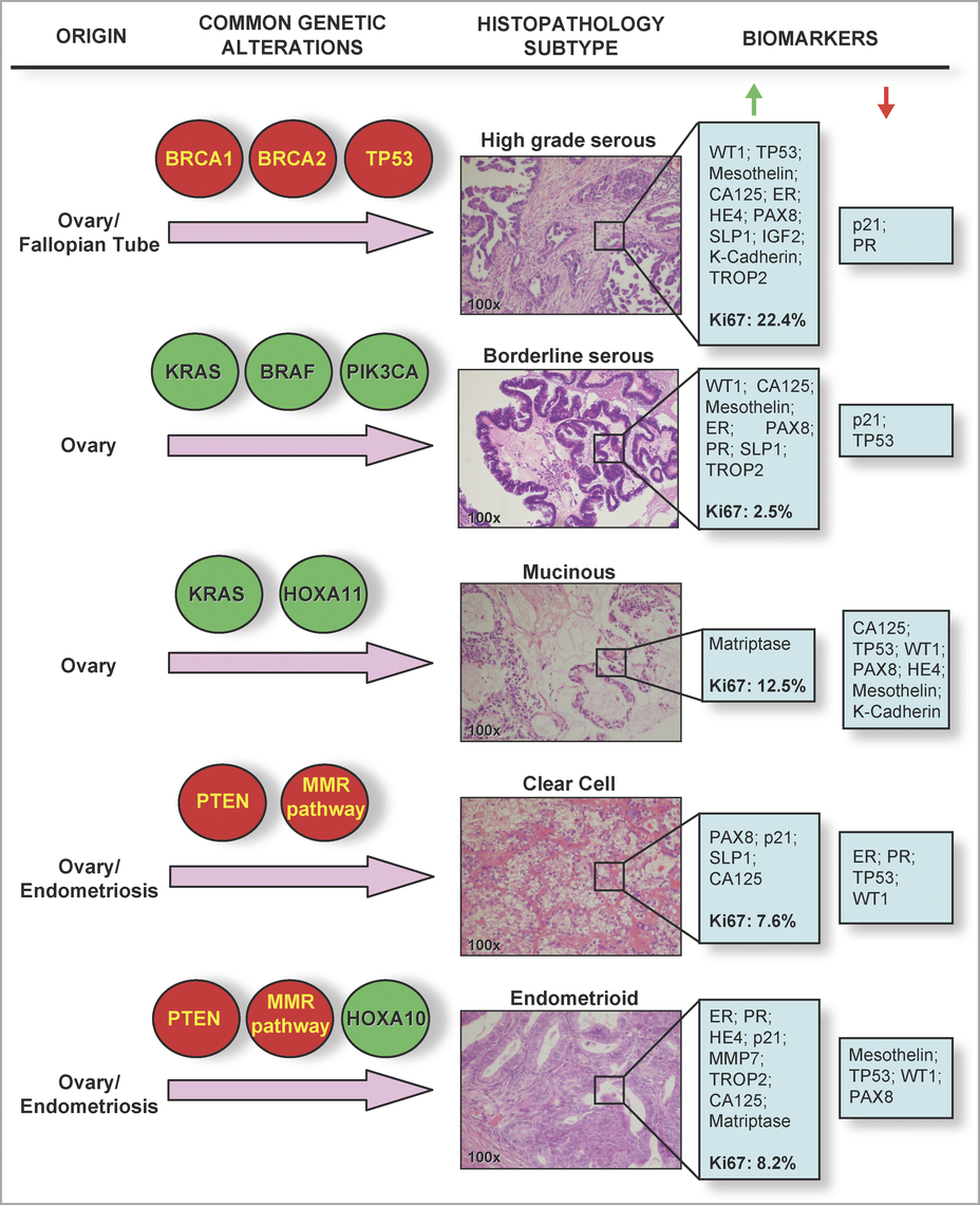 Histological and Molecular Heterogeneity in Epithelial Ovarian Cancers