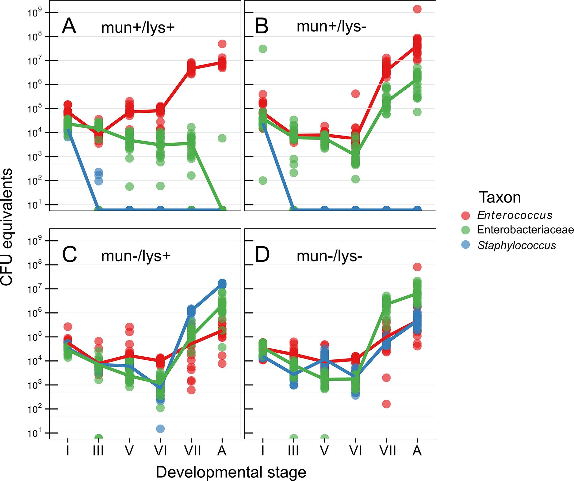 Abundance of bacteria during host metamorphosis.