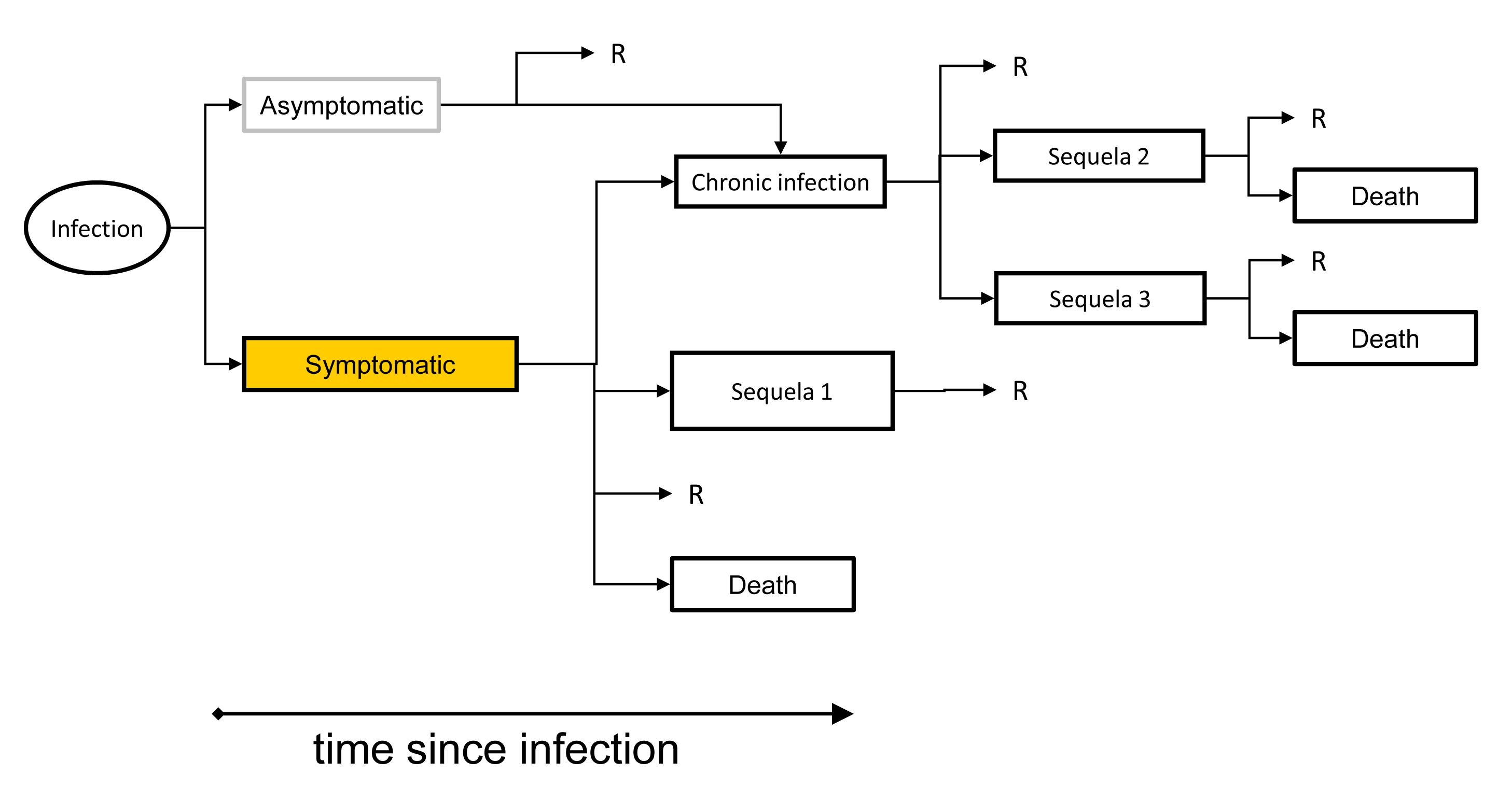 An outcome tree linking exposure, infection and all sequelae.