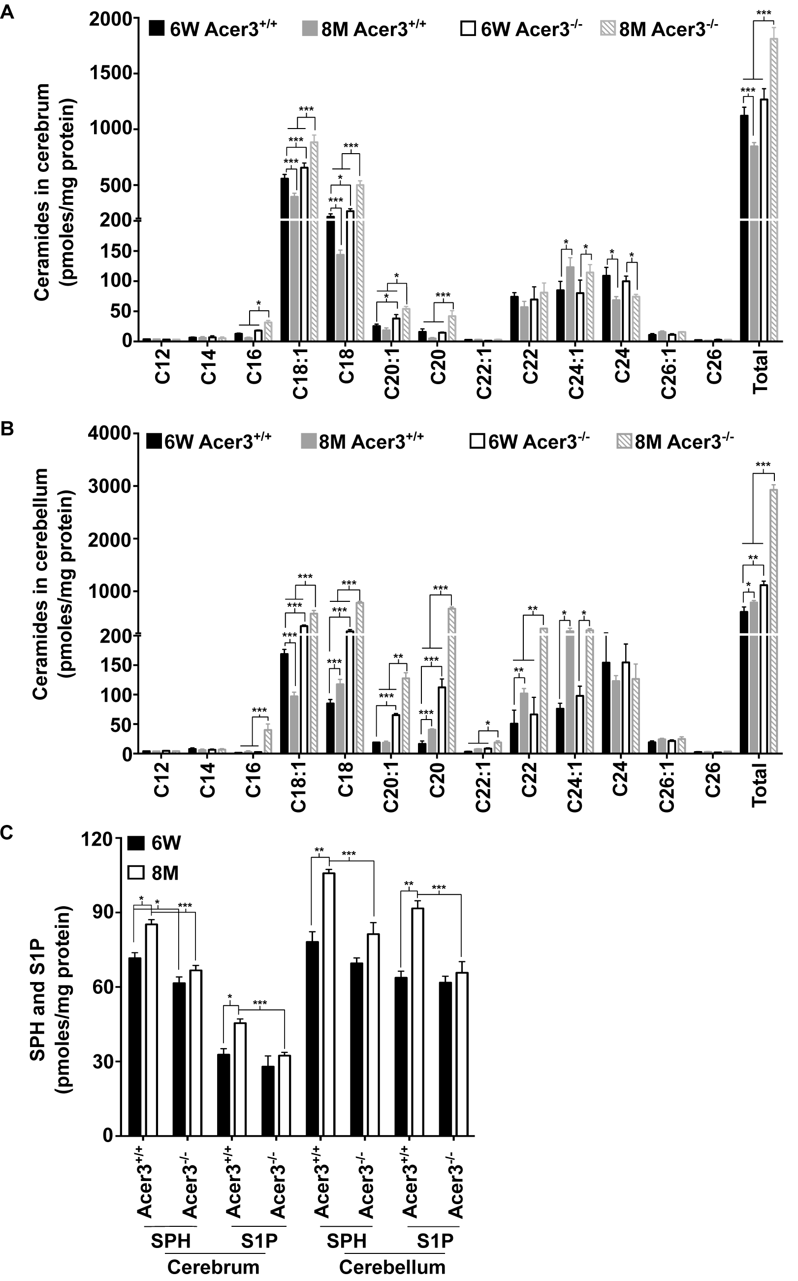 Acer3 upregulation is important for the homeostasis of ceramides, SPH, and S1P in aging brain.