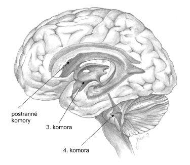 Komorový systém mozgu.