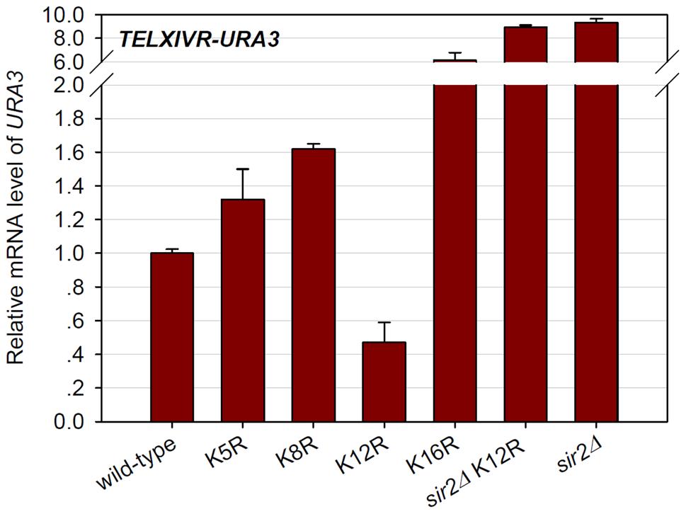 Histone H4K12 acetylation regulates basal transcription at telomeric heterochromatin.