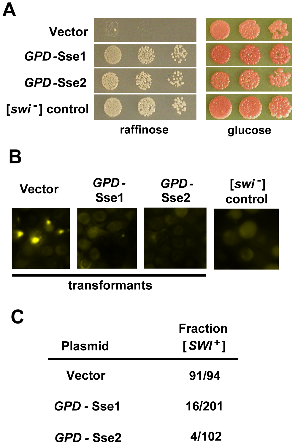 [<i>SWI</i><sup>+</sup>] is destabilized by overexpression of Sse1 or Sse2.