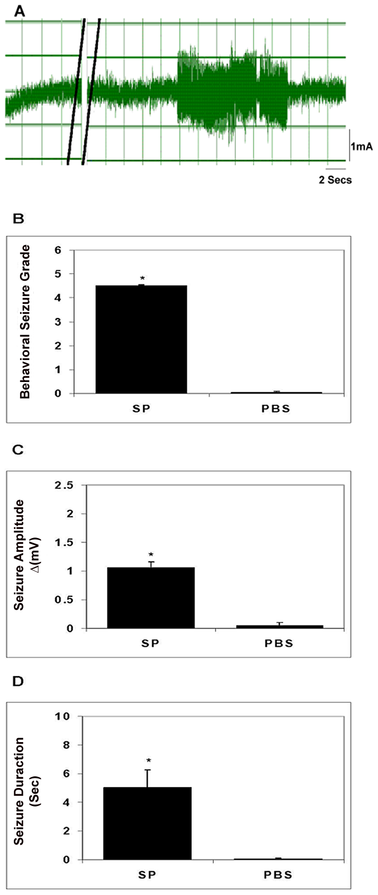 Seizure activity in rats following intrahippocampal injection of SP.