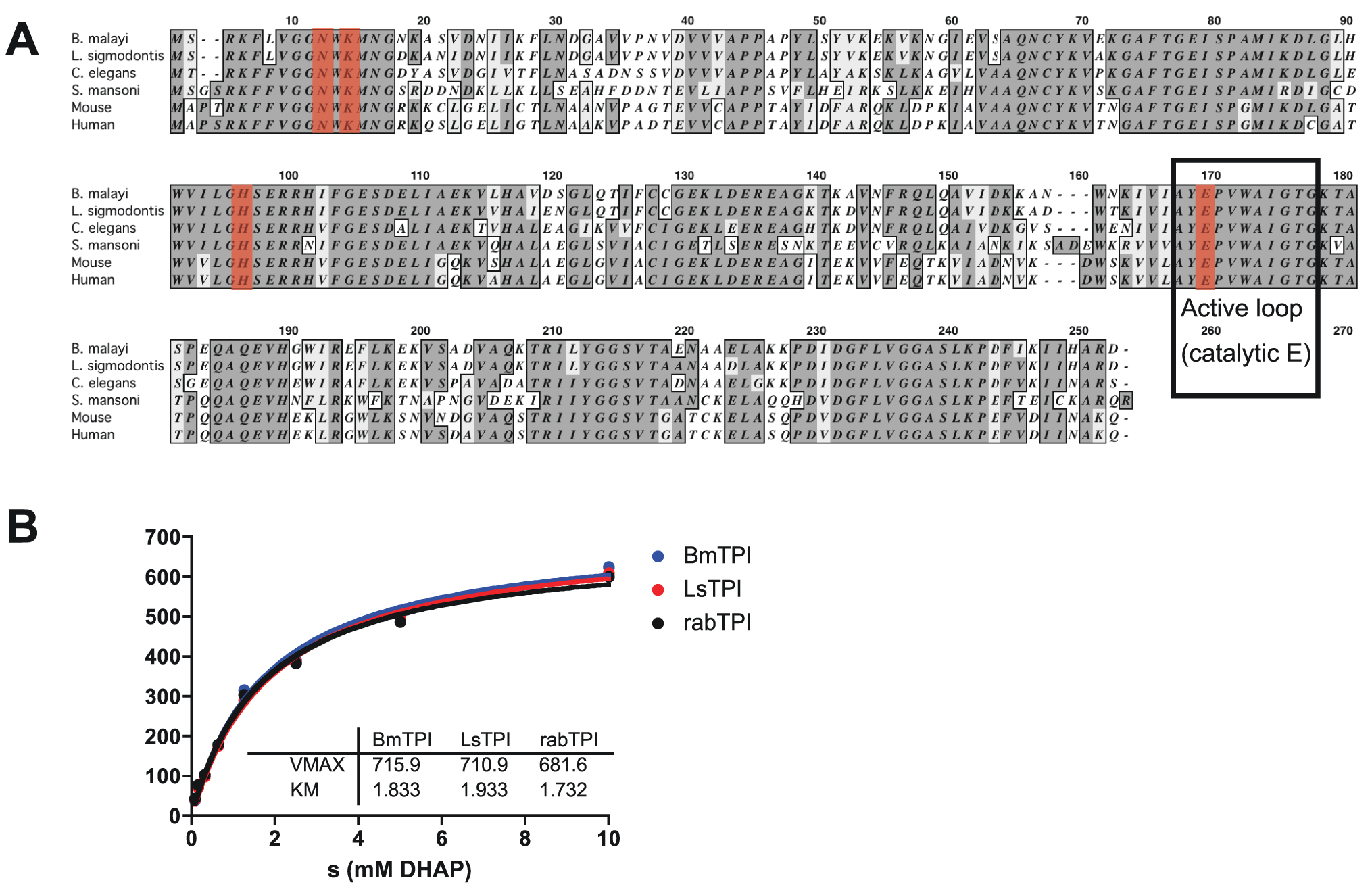 <i>Bm</i>-TPI is conserved in sequence and enzymatic function.