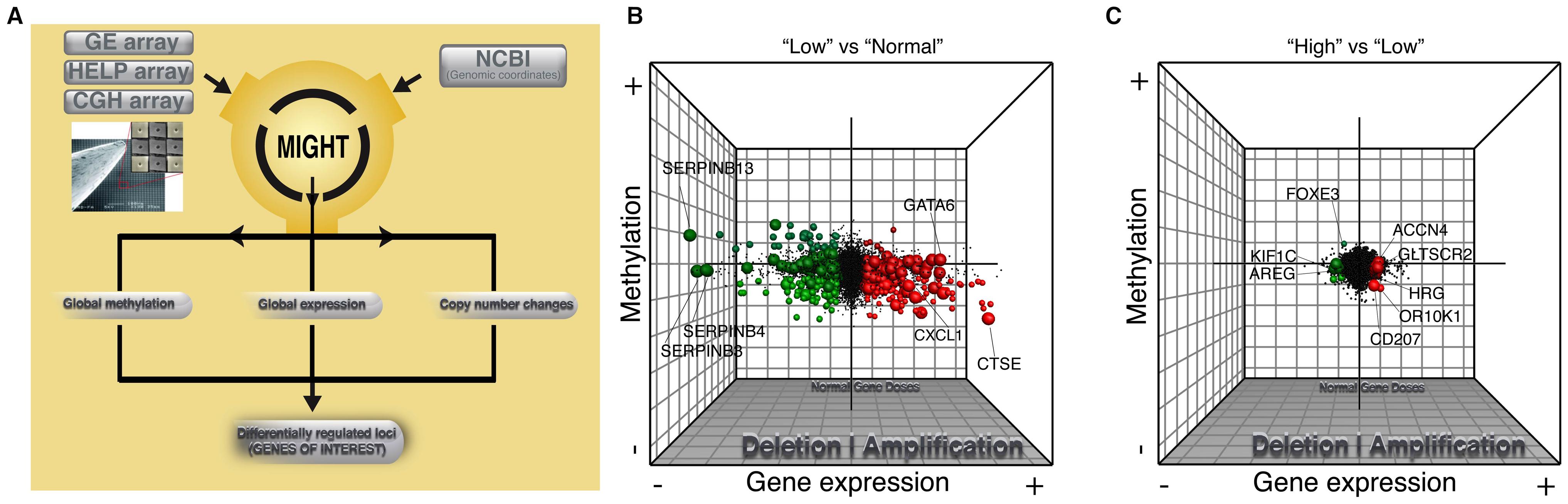Global integrative analysis of transcriptomic, epigenomic, and DNA copy number data.