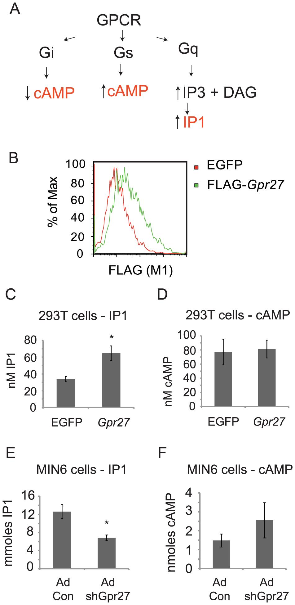 <i>Gpr27</i> positively regulates inositol phosphate levels.