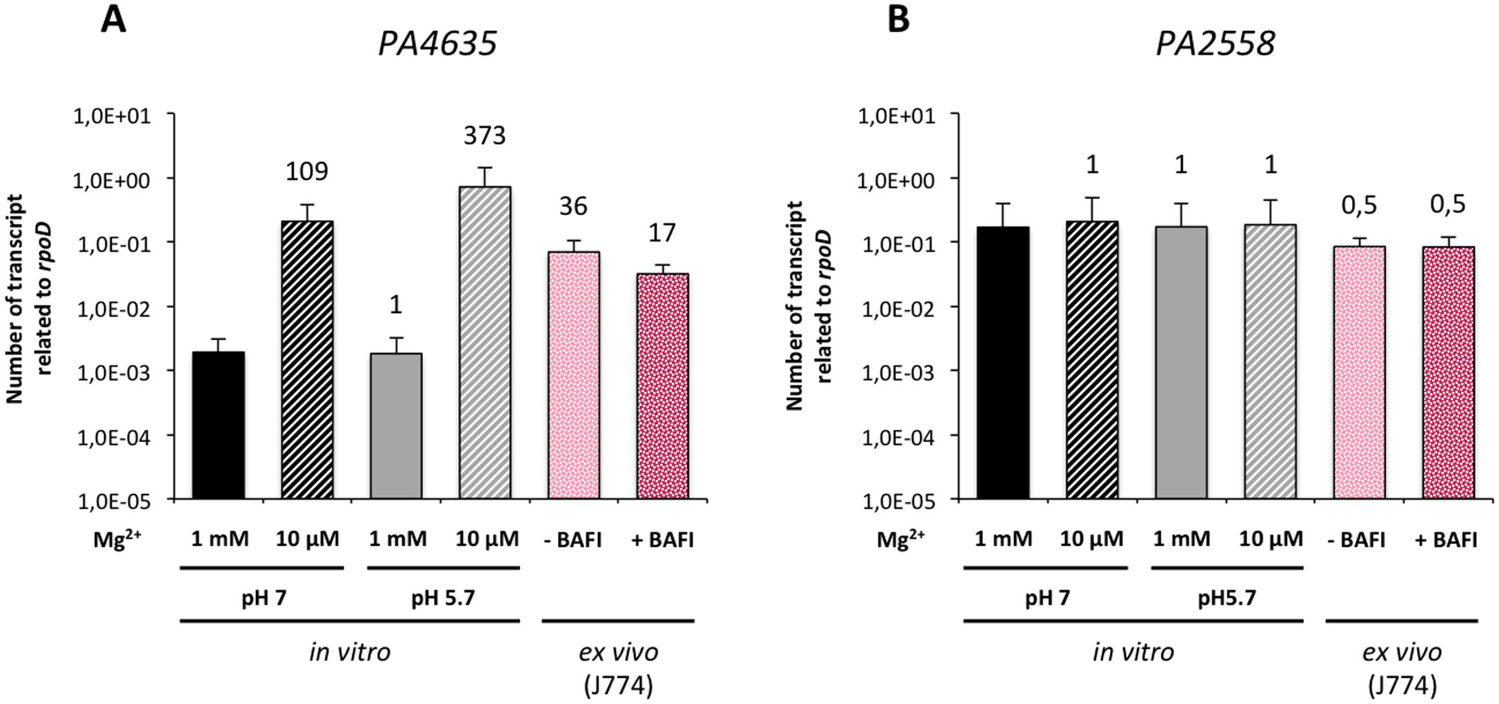 Expression of <i>P</i>. <i>aeruginosa mgtC</i> gene in liquid medium and intracellularly.