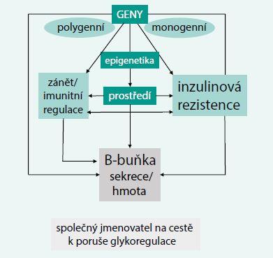Schéma 2. Základní faktory vedoucí k selhání B-buňky při vývoji diabetu