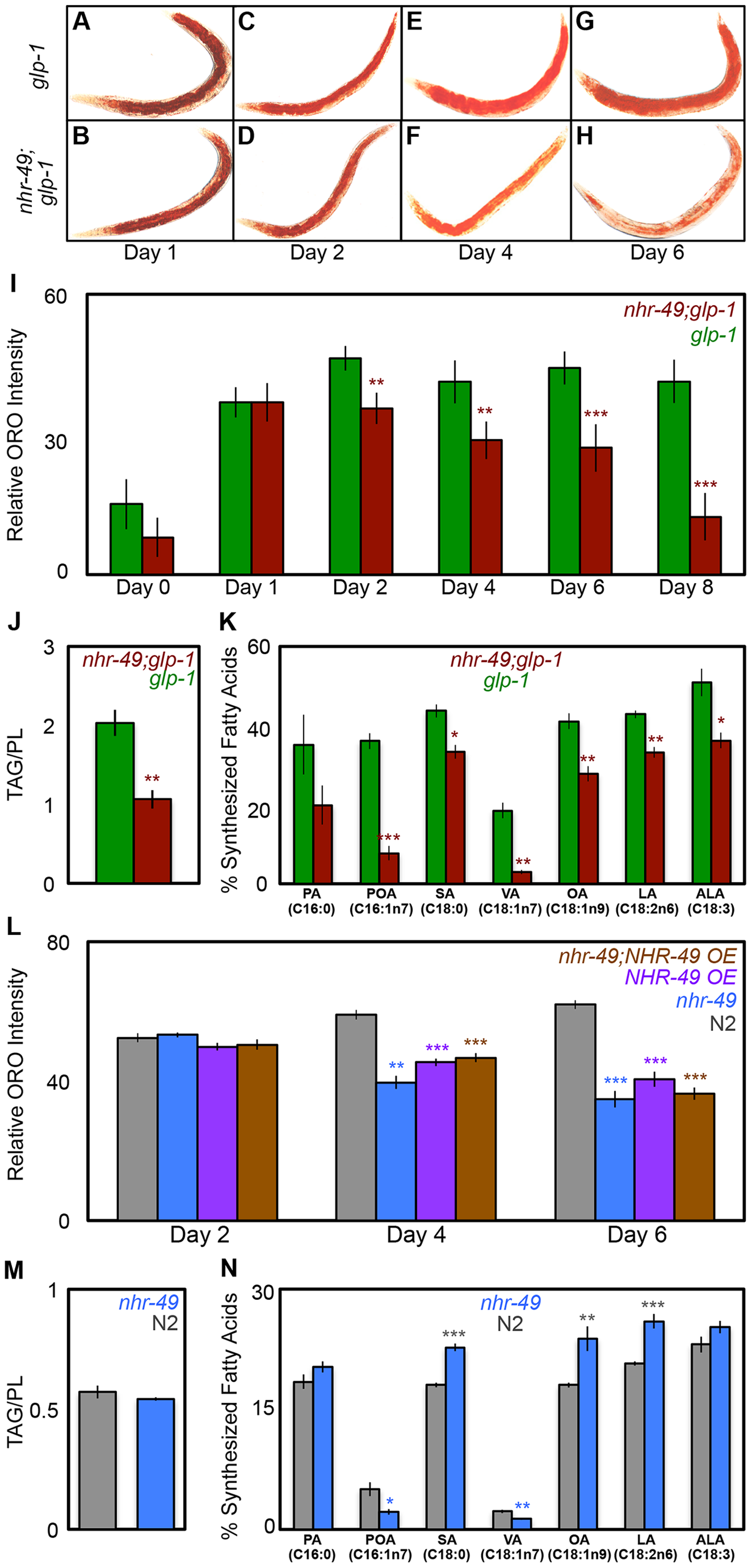 NHR-49 is required for maintenance of fat stores and <i>de novo</i> fat synthesis in germline-less adults.