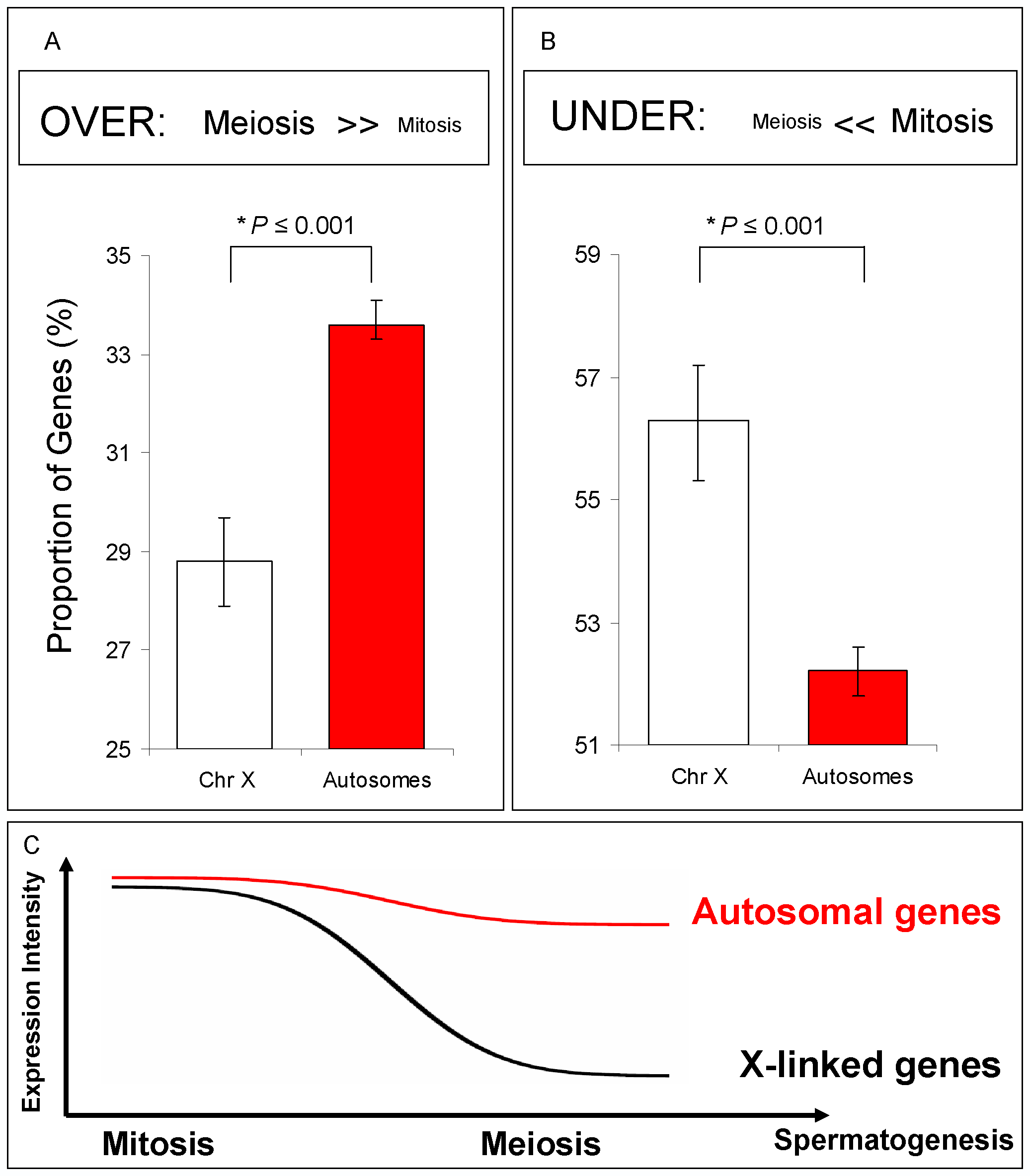 Spermatogenic gene expression for X-linked and autosome-linked genes.