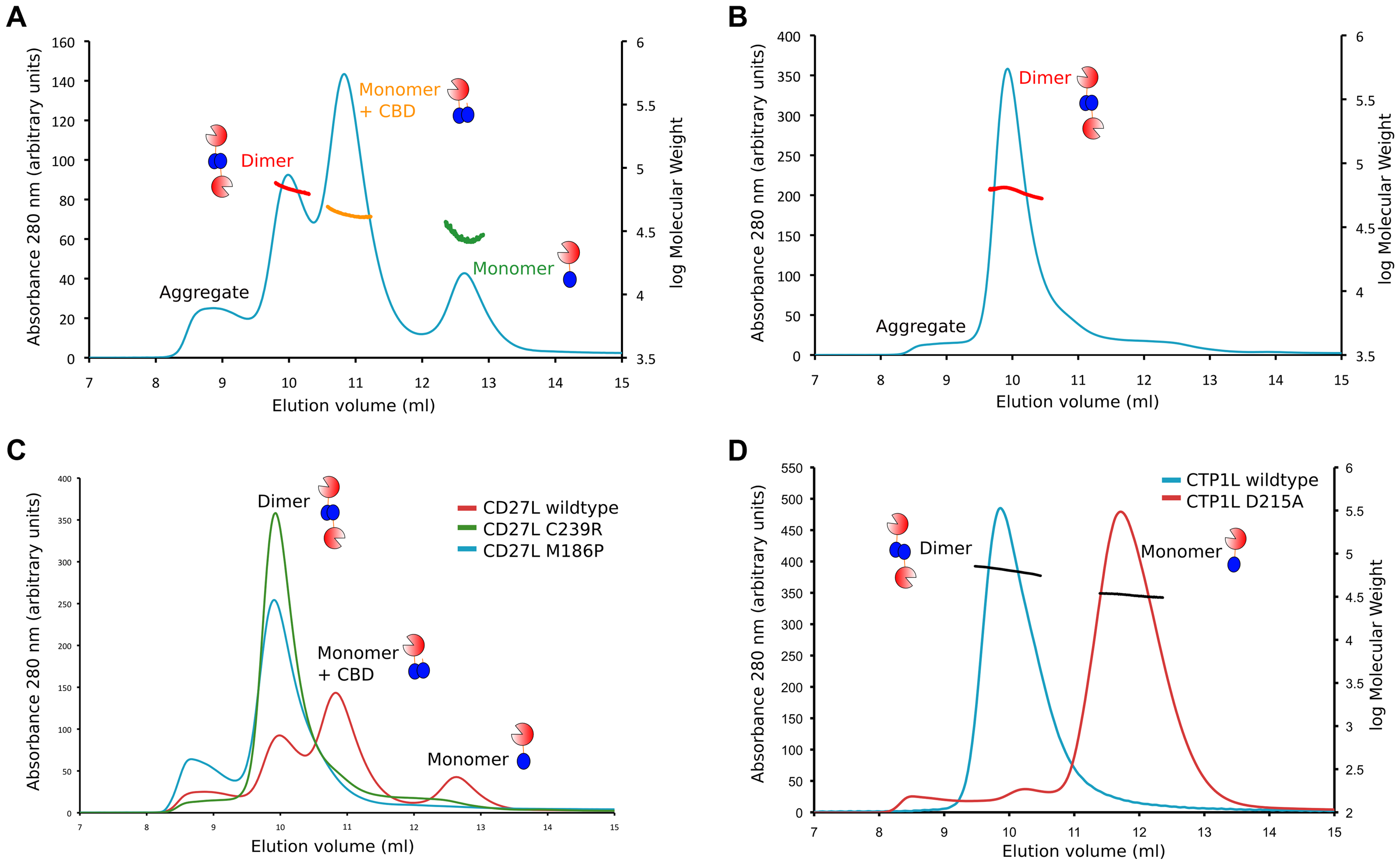 Oligomerization of CD27L in solution for wild-type and the M186P and C238R mutants.