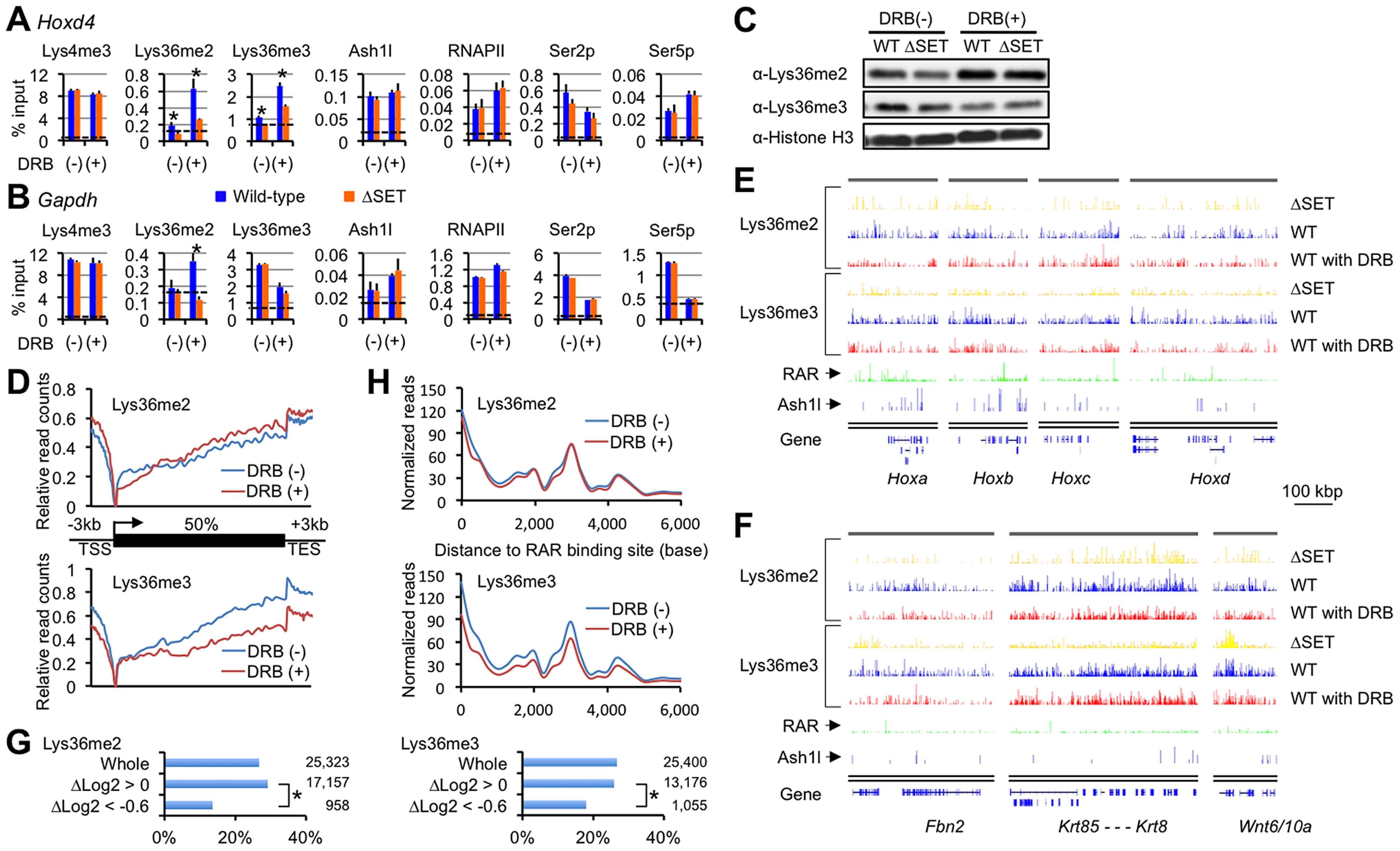 Lys36me2 occurs independently of the Ser2-phosphorylation of RNAPII, while Lys36me3 occurs in a context-dependent manner.