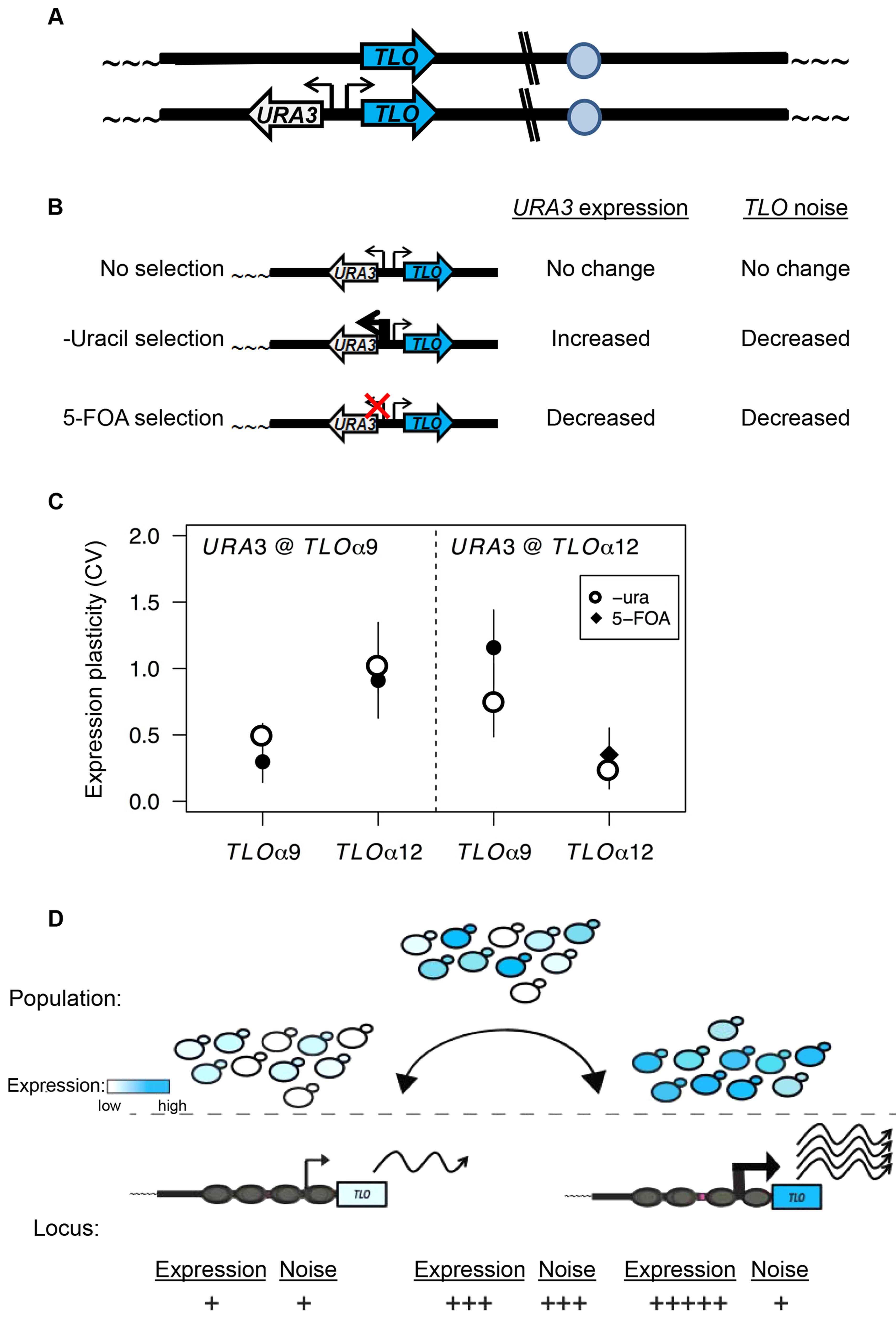 TPE produces <i>TLO</i> expression plasticity.