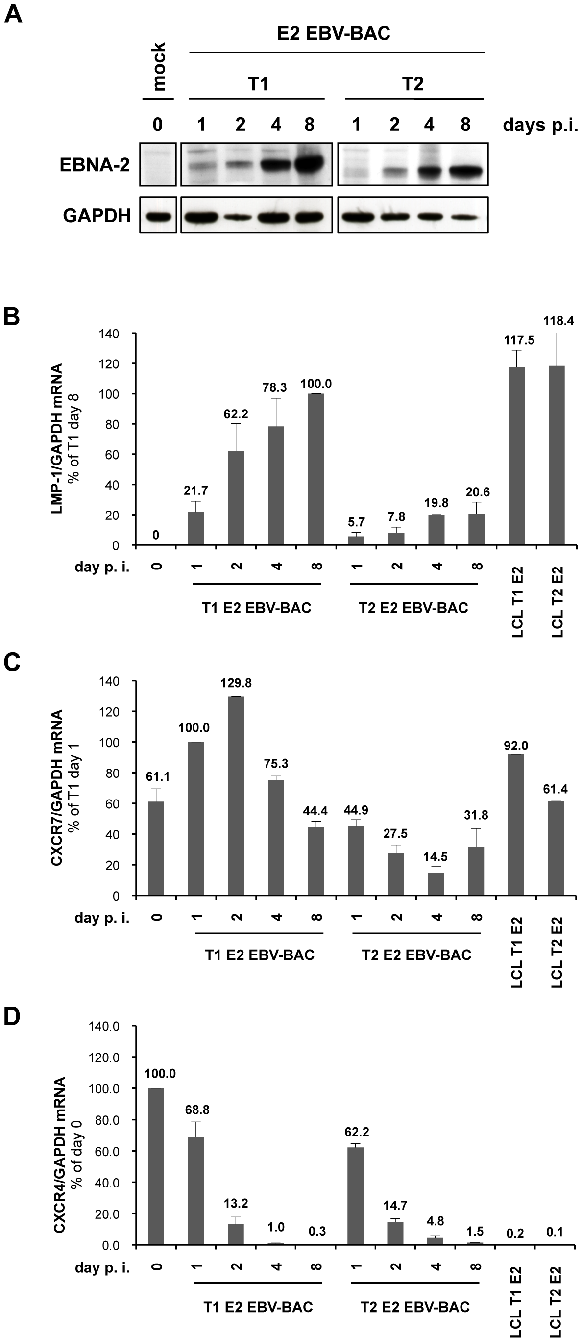 Differential regulation of LMP-1 and CXCR7 genes during early stages of infection of primary B cells with BAC-derived EBV expressing type 1 EBNA-2 or type 2 EBNA-2.