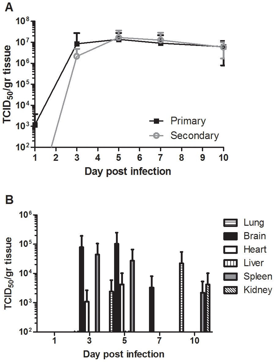 Nipah virus replication in human lung xenografts.