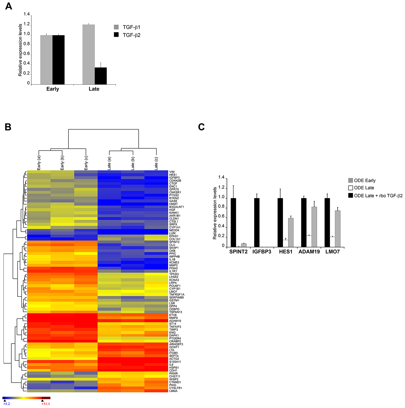 <i>In vitro</i> attenuation is associated with lower TGF-b2 expression and altered transcripts levels of TGF-b-regulated genes.