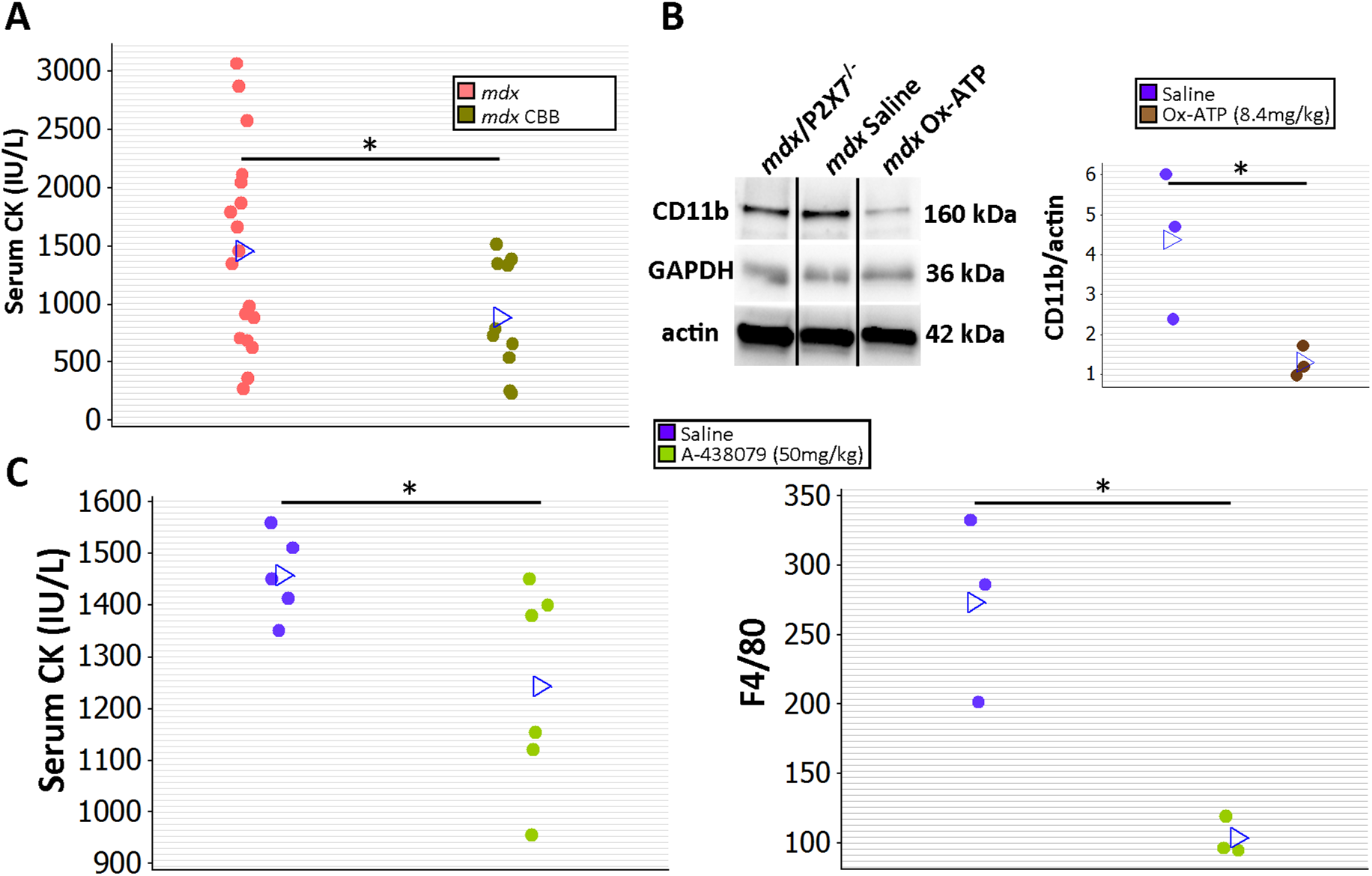 Short-term P2RX7 antagonist administration reduces severity of muscle pathology.