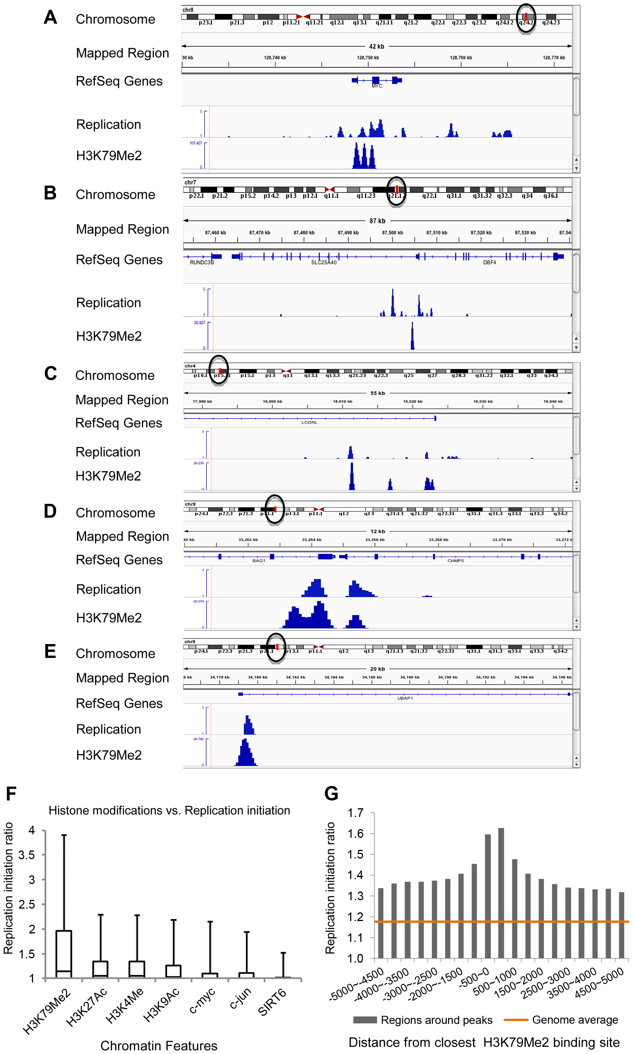H3K79Me2 containing chromatin is associated preferentially with replication initiation sites genome-wide.