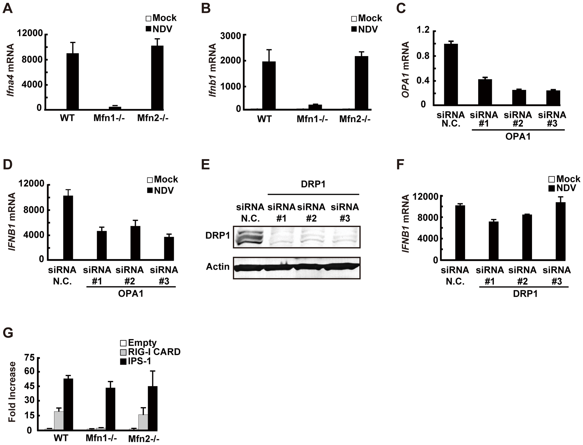 MFN1 plays a critical role in RIG-I–induced signaling.