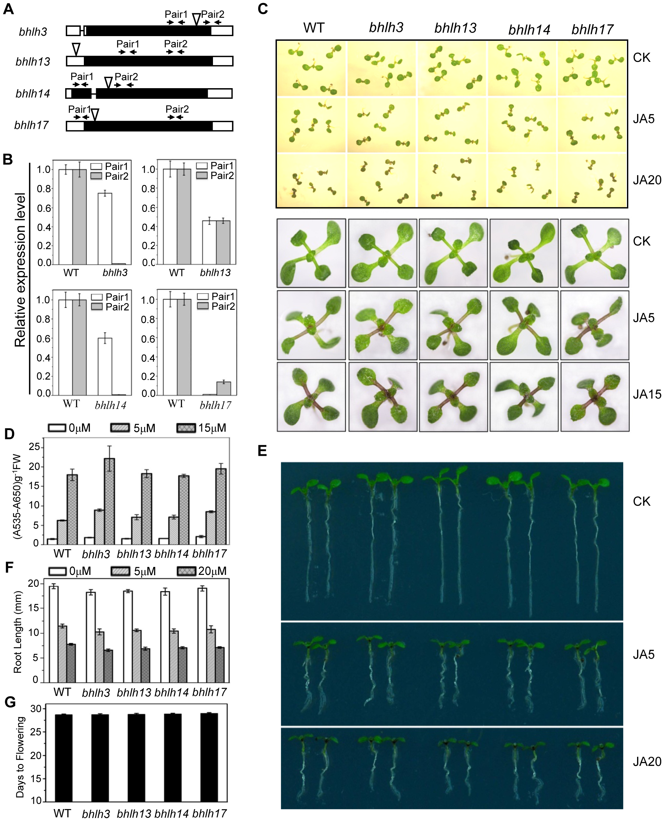 JA responses were not obviously altered in the <i>bhlh3</i>, <i>bhlh13</i>, <i>bhlh14</i> and <i>bhlh17</i> single mutants.