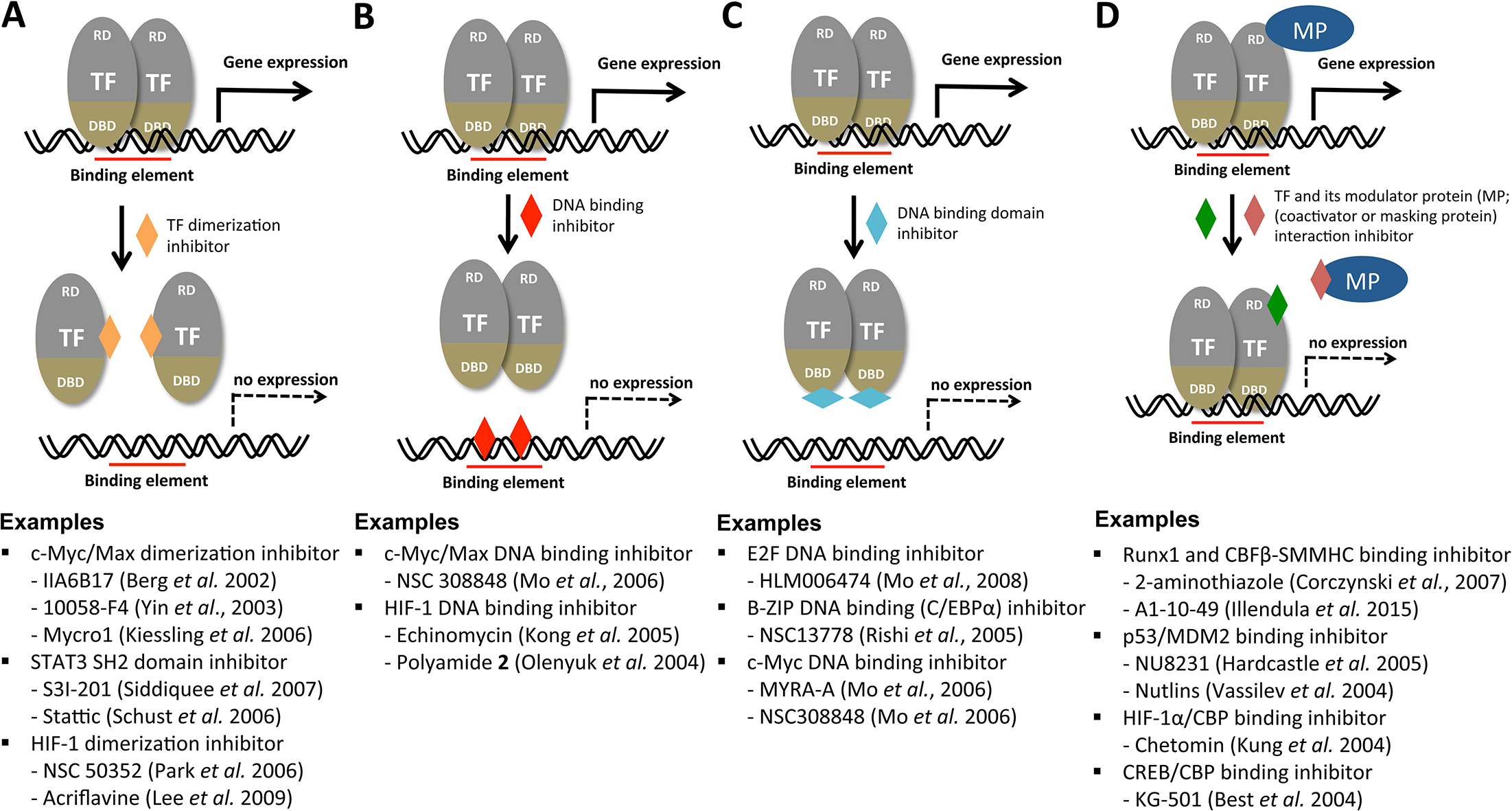 Potential mechanisms for the chemical modulation of transcription factors.