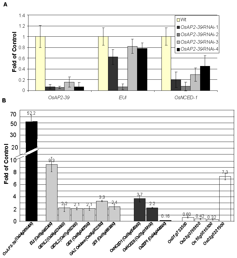 Alteration the expression of <i>OsAP2-39</i> affects the expression level of ABA and GA related genes are altered in the transgenic rice.