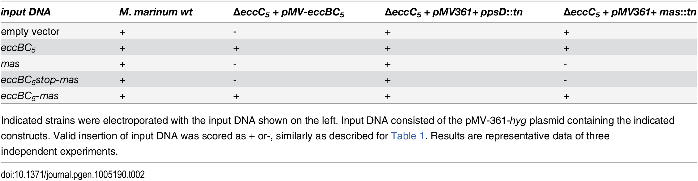 Complementation of <i>mas</i>::<i>tn</i> in the Δ<i>eccC</i><sub><i>5</i></sub> mutant by replacement of the integrated pMV vector.