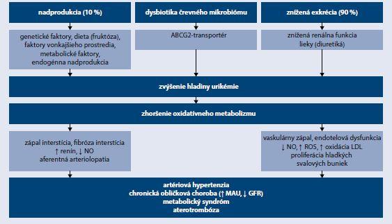 Schéma | Patofyziológia hyperurikémie a kardiorenálneho syndrómu