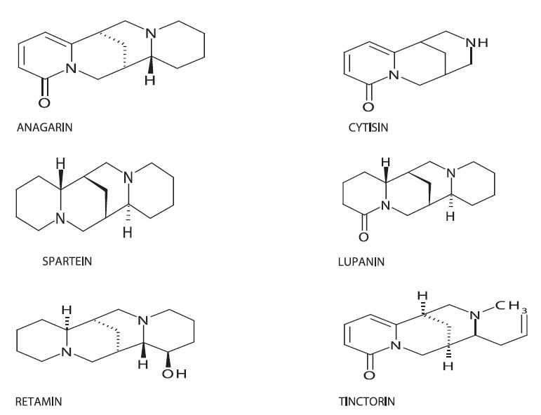 Chemická struktura některých chinolidizinových alkaloidů