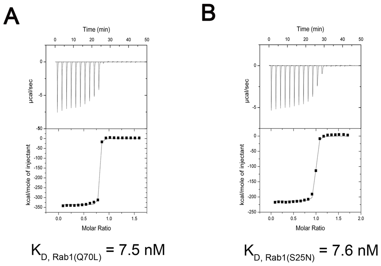 Measurement of binding affinity between LidA and GTP-bound or GDP-bound Rab1 by ITC.