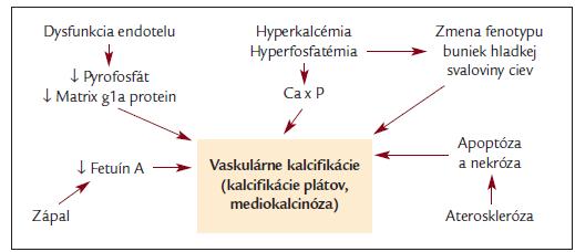 Schéma etiopatogenézie vaskulárnych kalcifikácií.