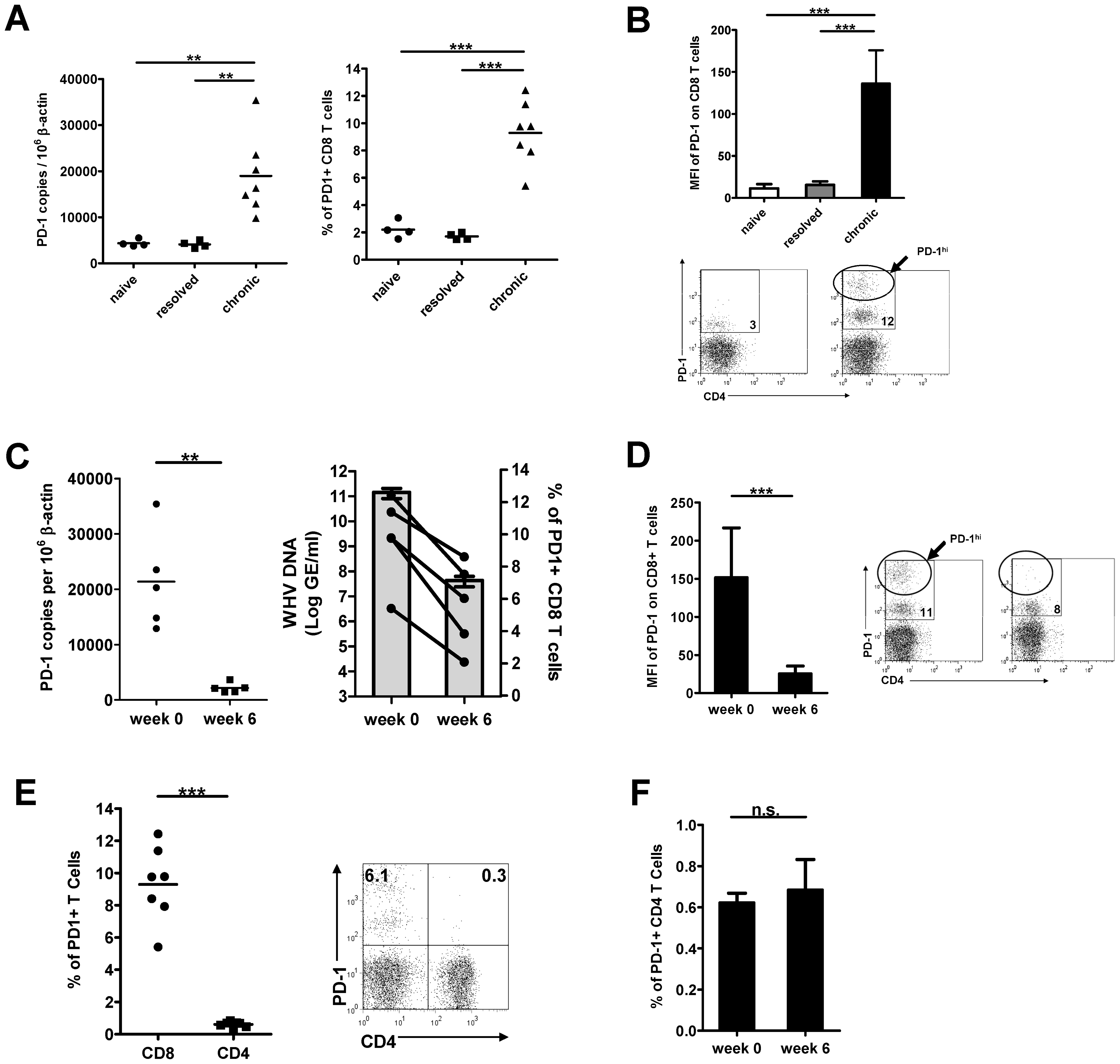 Expression of PD-1 on PBMCs and T cells during chronic WHV infection.