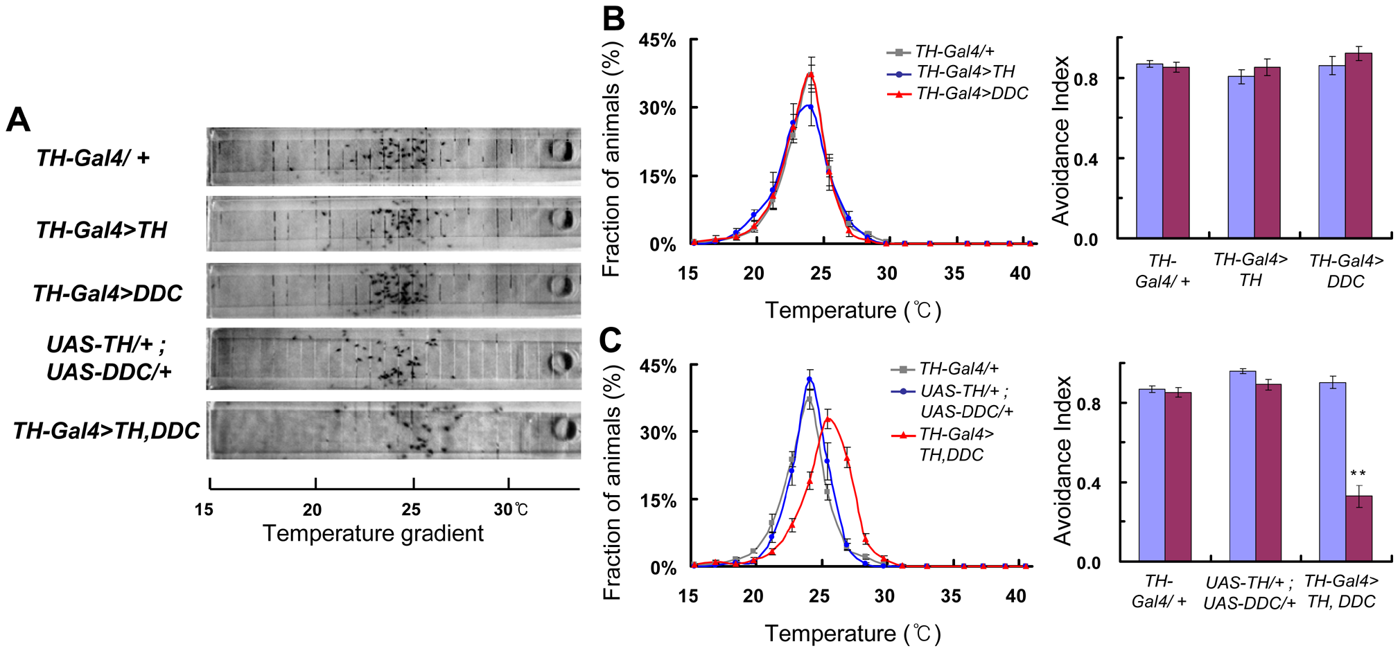 Dopamine biosynthesis is critical for flies to avoid cold temperature.