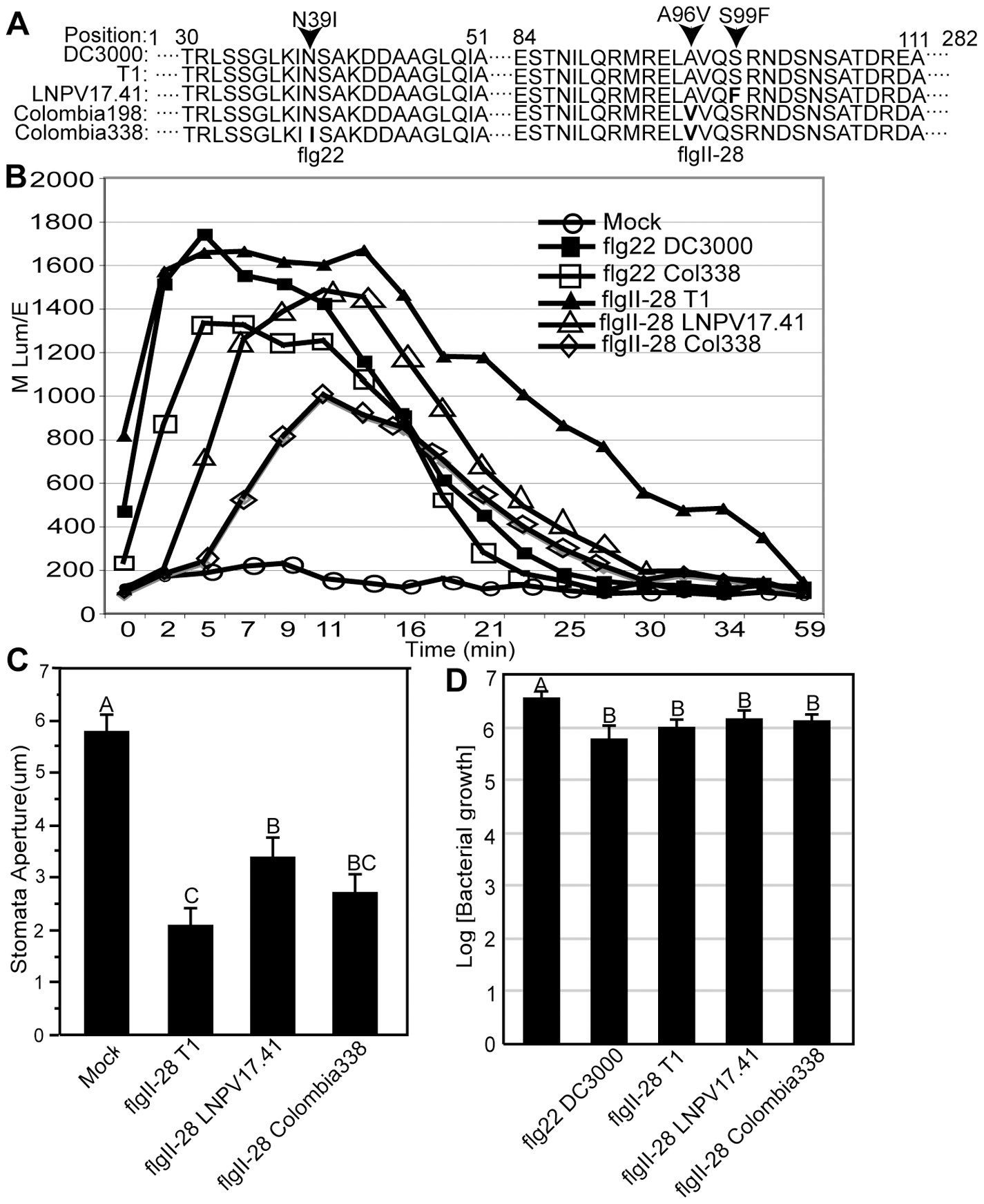 The flagellin epitope flgII-28 triggers reactive oxygen species (ROS) in tomato leaves whereby derived alleles - typical of today's <i>Pto</i> strains - induce less ROS than the ancestral alleles - typical of strains isolated before 1985.